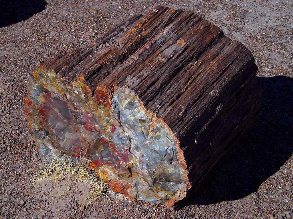 метка вымышленный каменное дерево фото середине июля