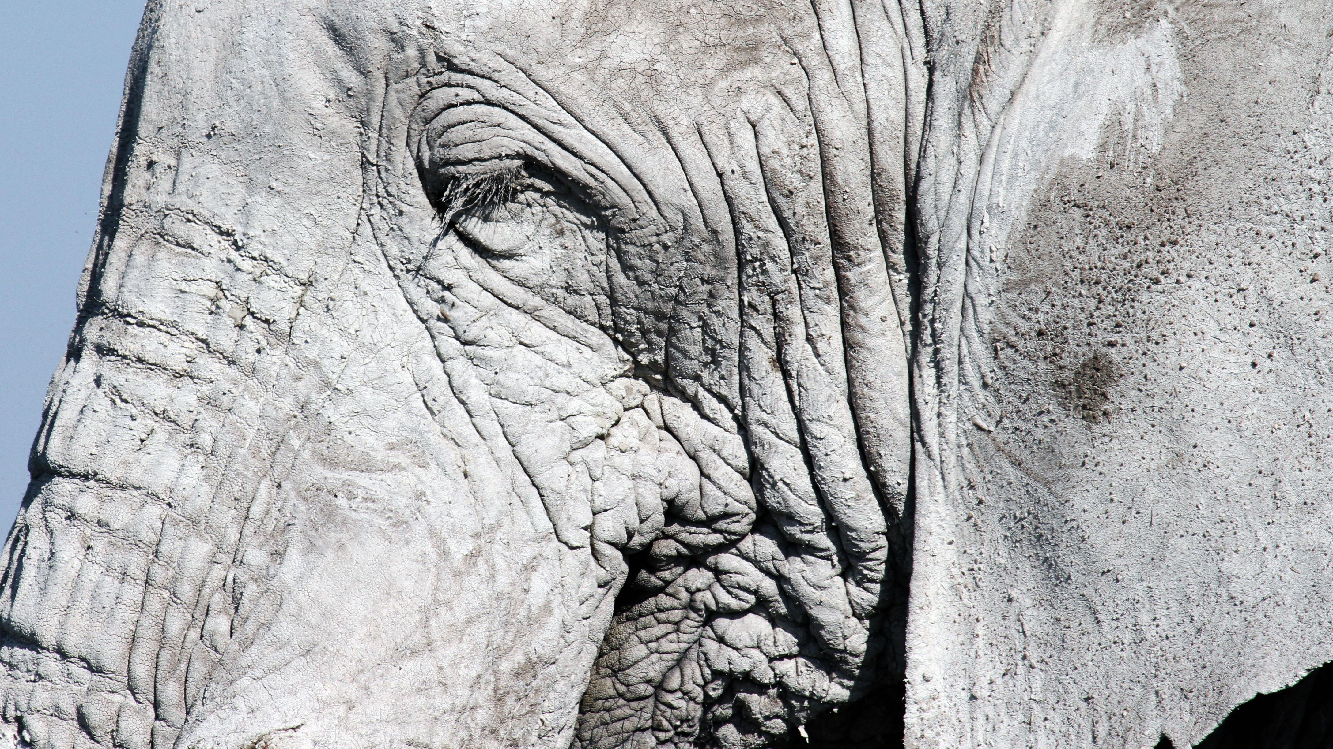 Free images rock wood statue monochrome elephant