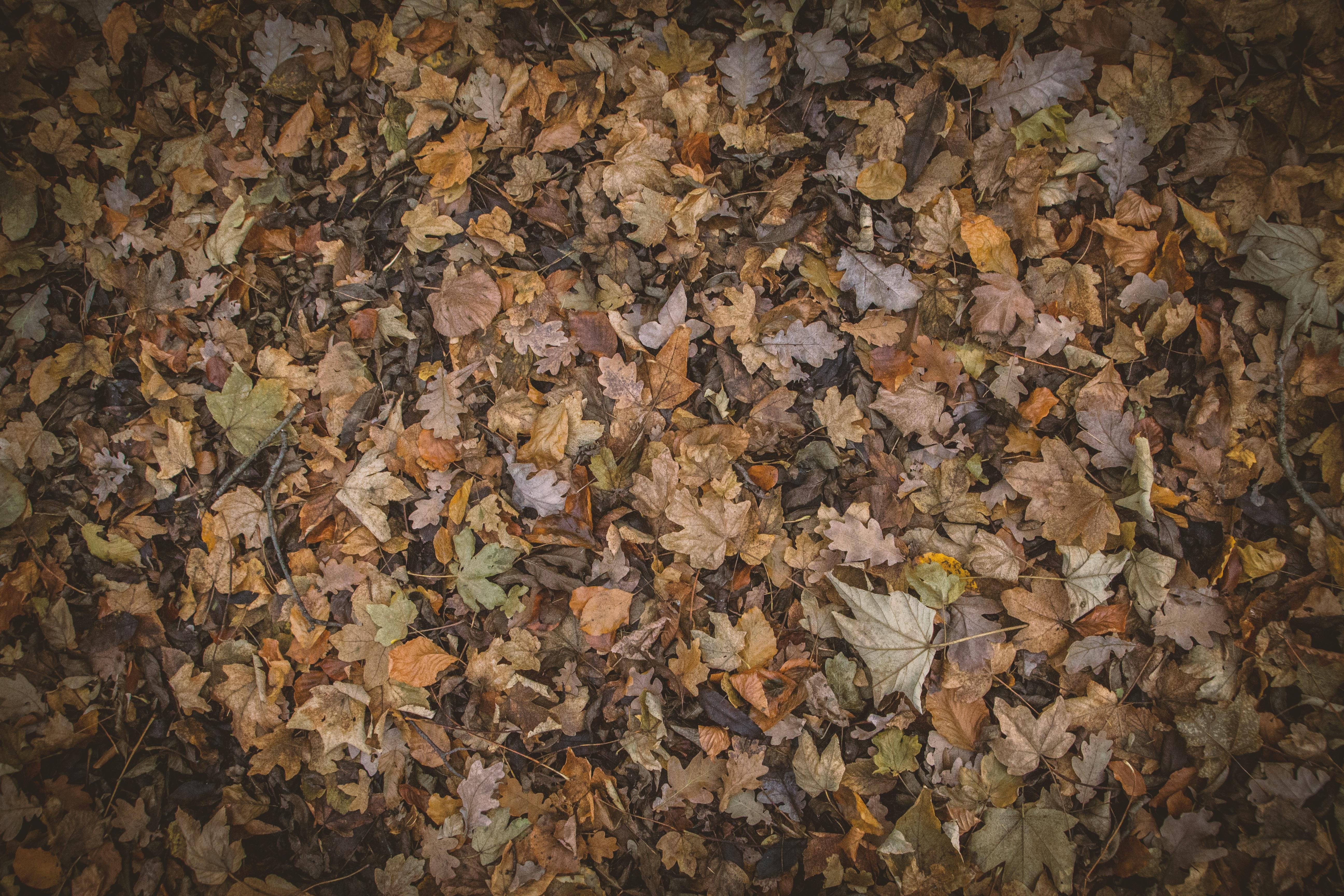 rock wood texture leaf pattern autumn brown soil material design autumn leaves autumn colours autumnal nature photography flooring hd wallpaper 1364183