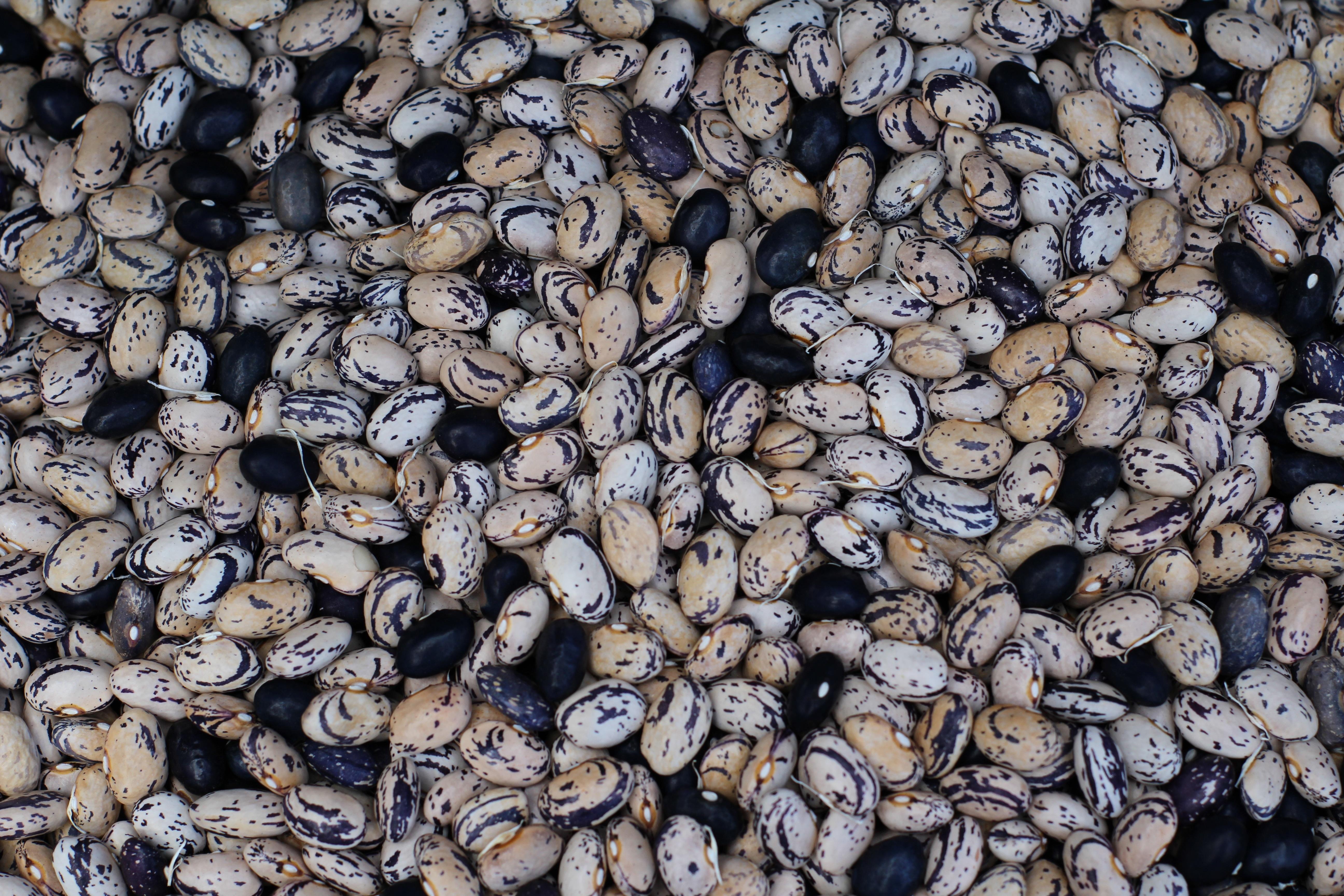 Rock Wood White Texture Flower Food Produce Pebble Soil Black Material Rubble Background Numbers Gravel Bob
