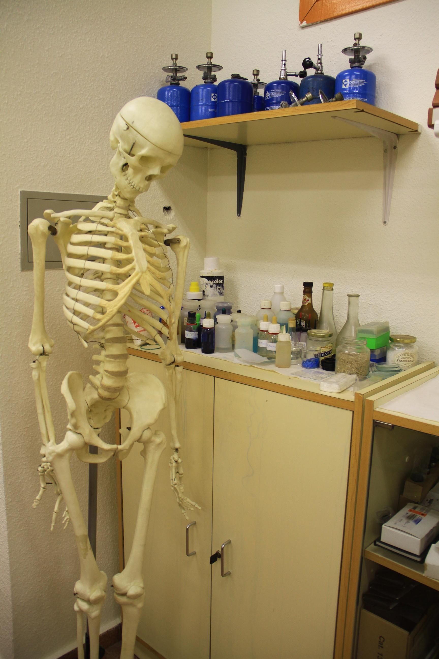 Kostenlose foto : Zimmer, Medizin, Spielzeug, Skelett, Anatomie ...