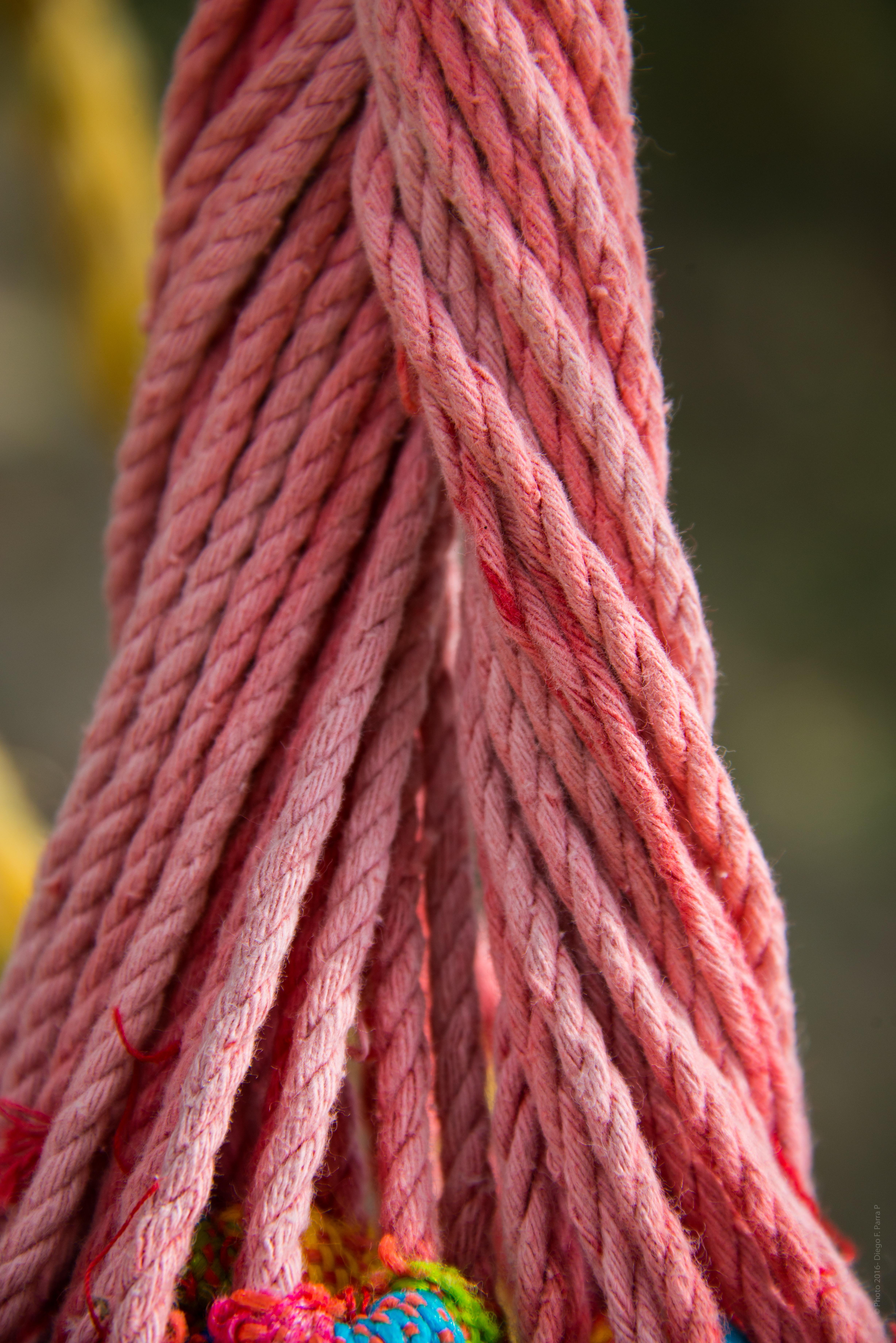 Fotos gratis : cuerda, flor, rojo, relajarse, color, Corbata ...