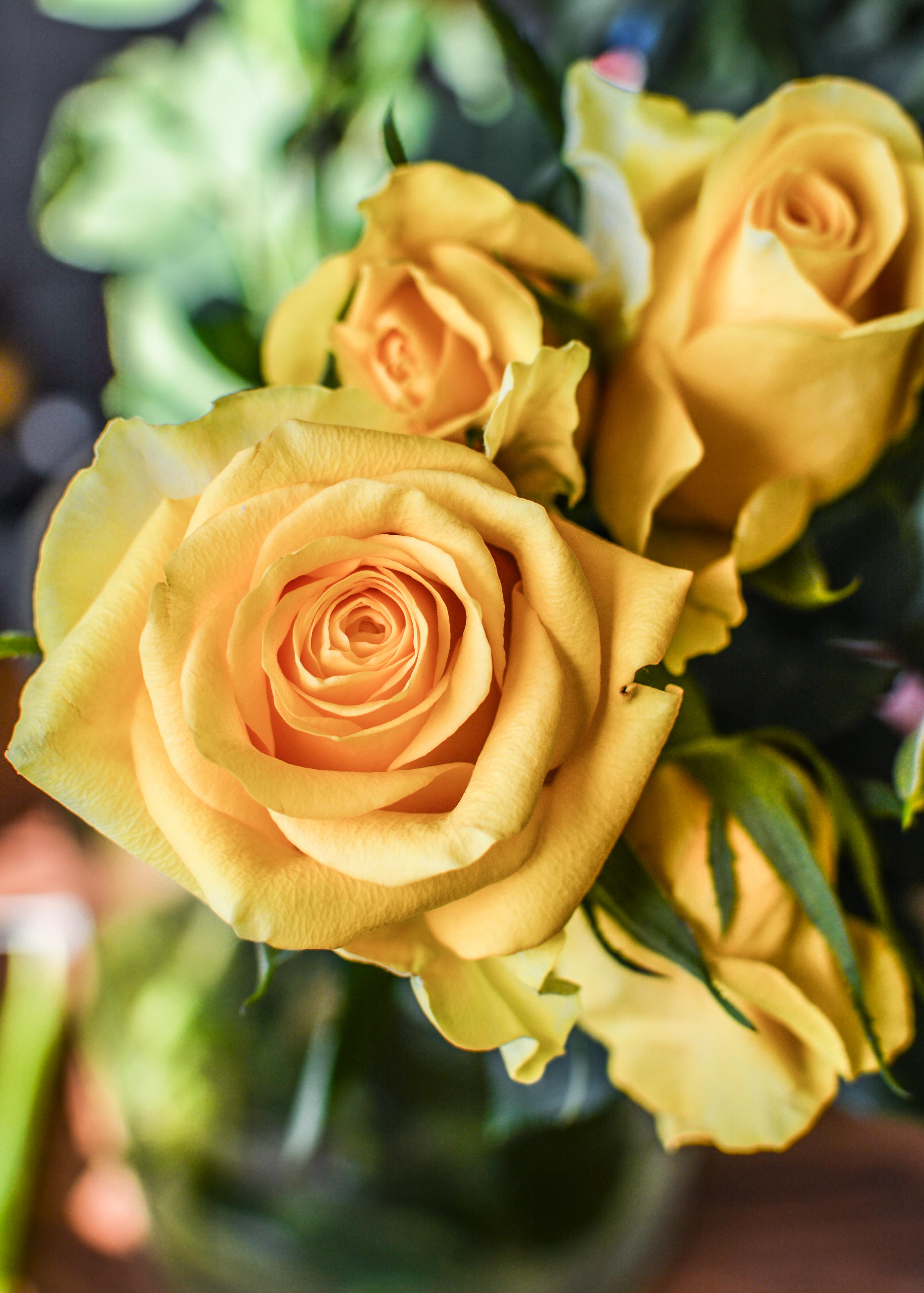 Free Images Anniversary Romance Gift Petal Romantic