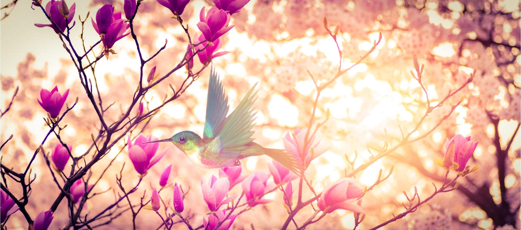 Free Images Rose Natur Landscape Spring Flowers Natural Bird