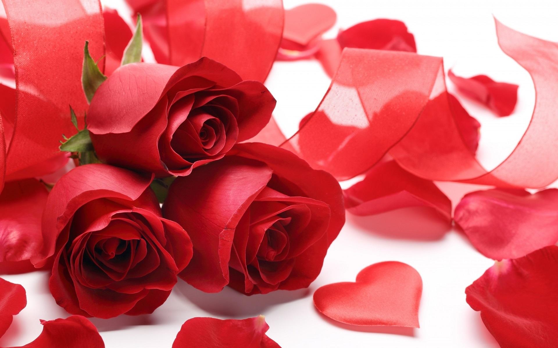 Gambar Mawar Jantung Cinta Simbol Percintaan Valentine