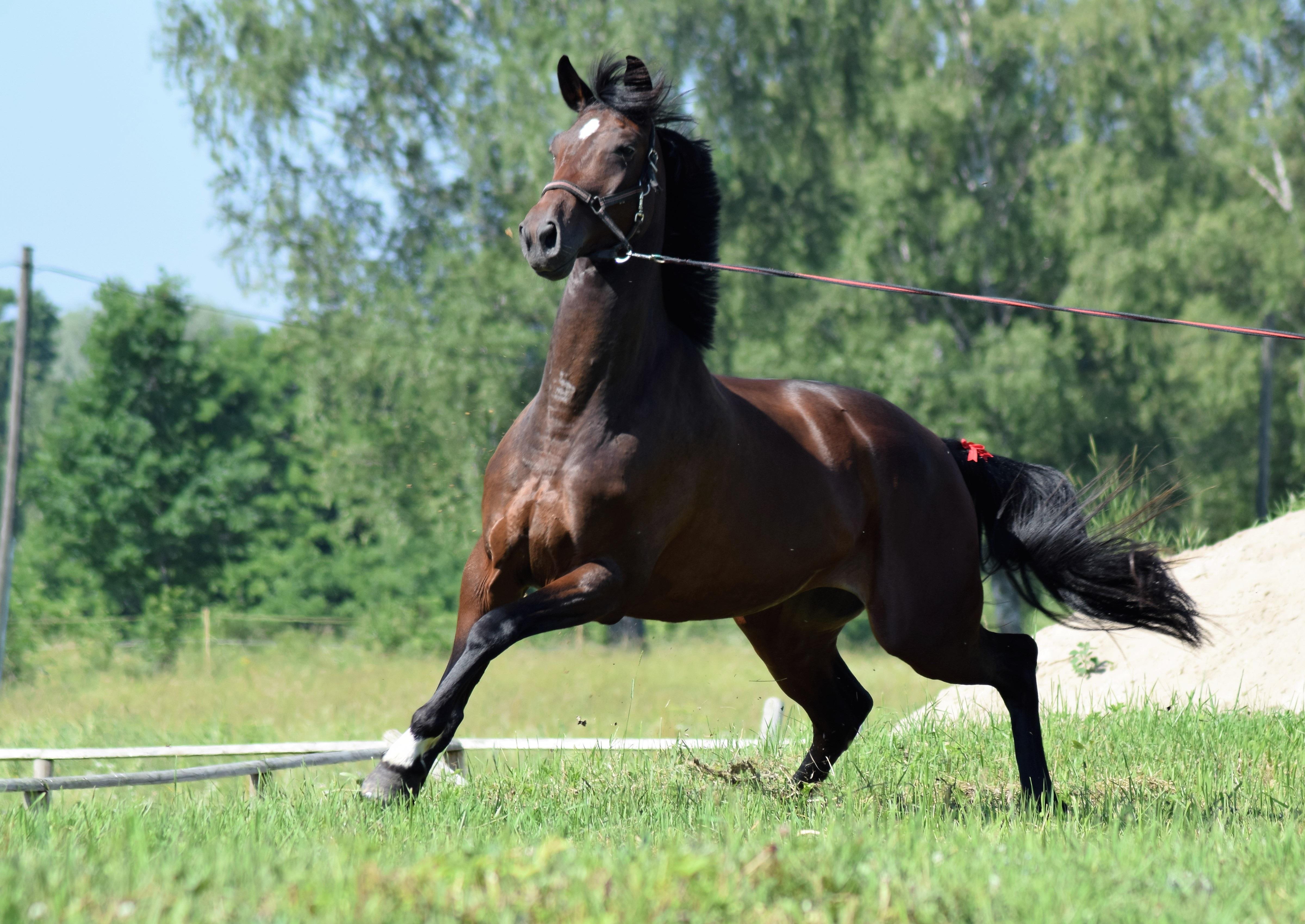 Images Gratuites : Fonctionnement, Animal, Sauvage, Pâturage, Ranch, Marron, Rêne, étalon