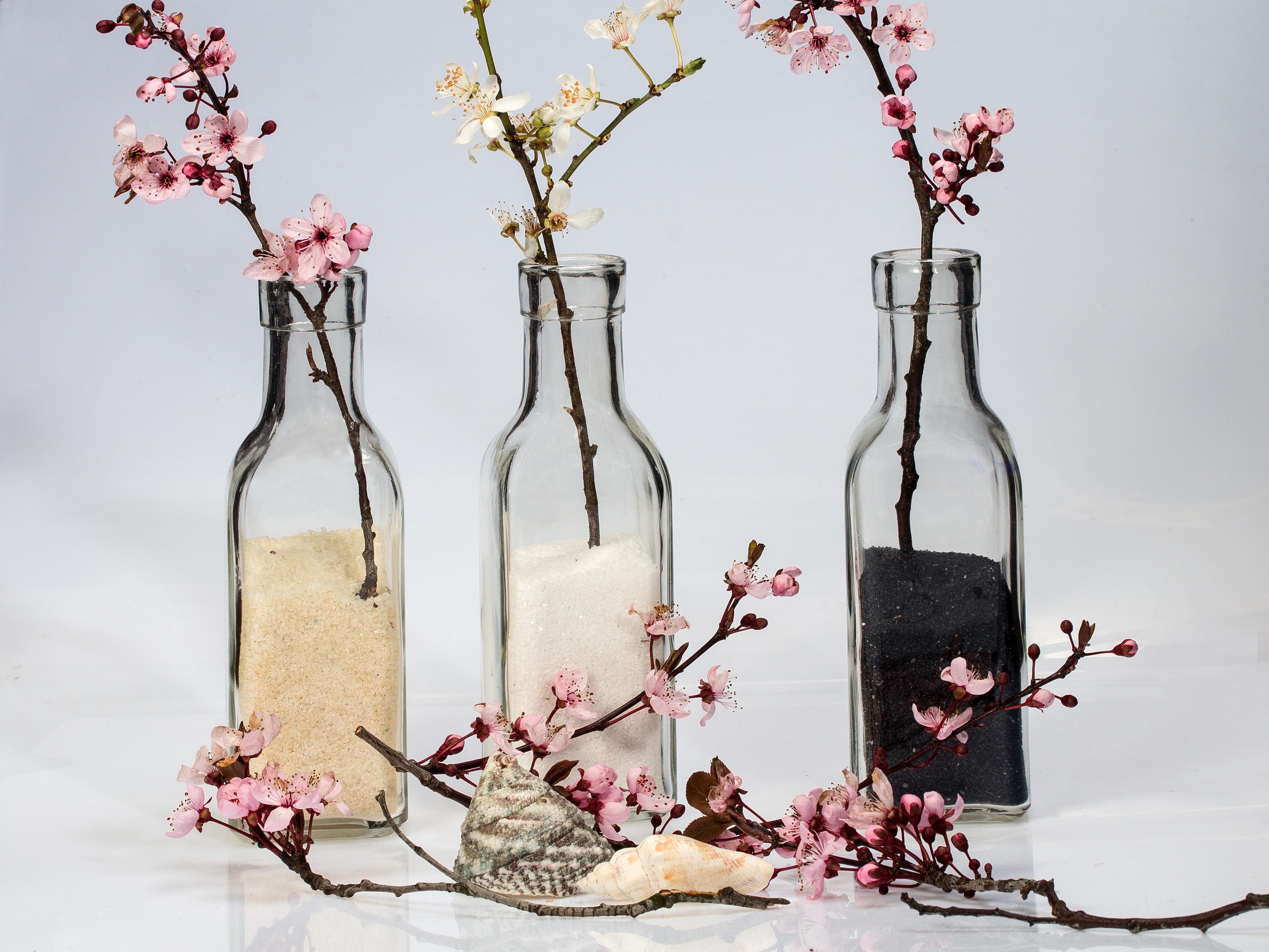 Fotoğraf şube çiçek Bardak Bahar Pembe Kiraz çiçeği Boyama