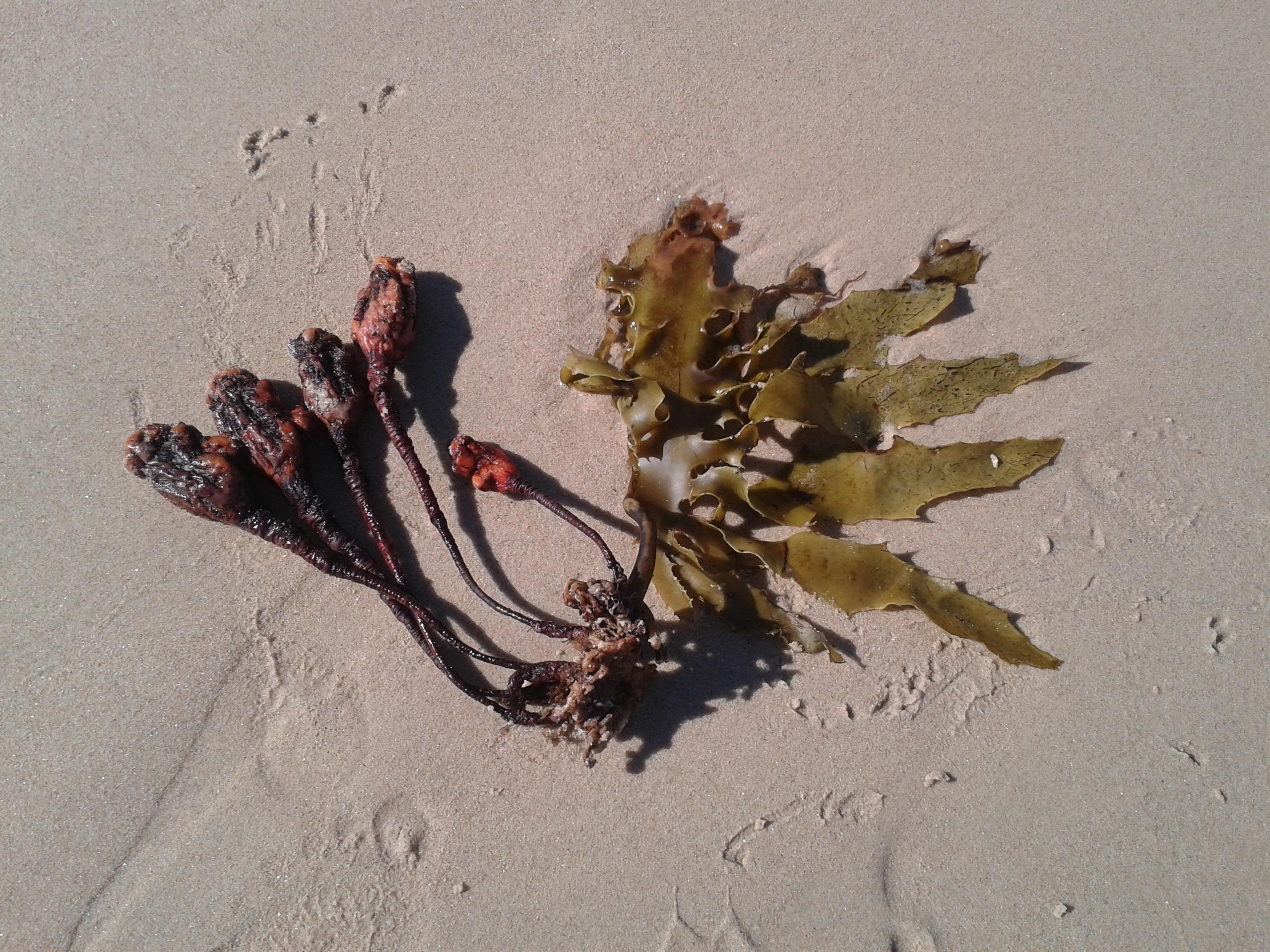 Gambar Pasir Daun Benih Bunga Warna Rumput Laut
