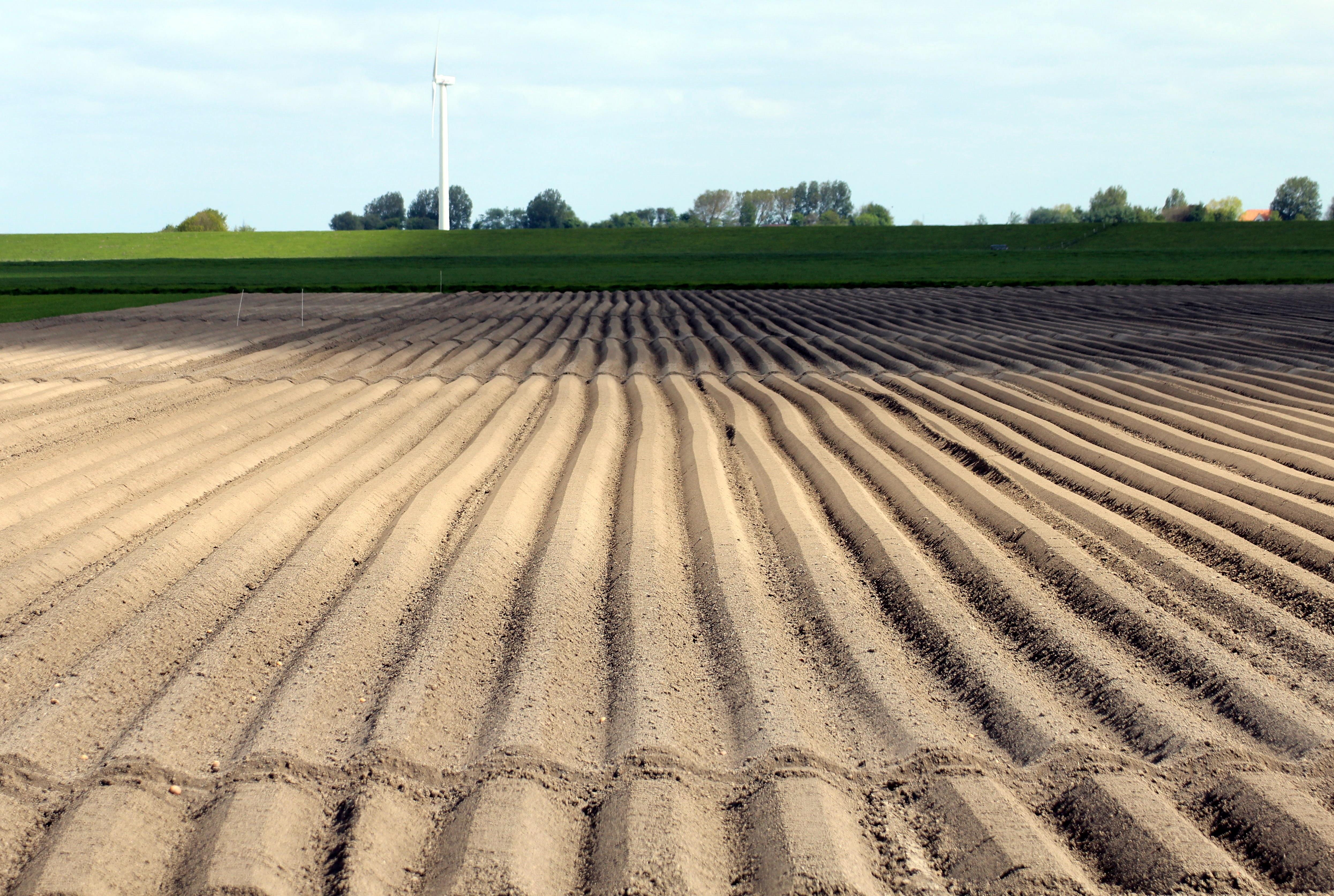 Kostenlose foto  Sand Pflanze Feld Asphalt Ernte Boden