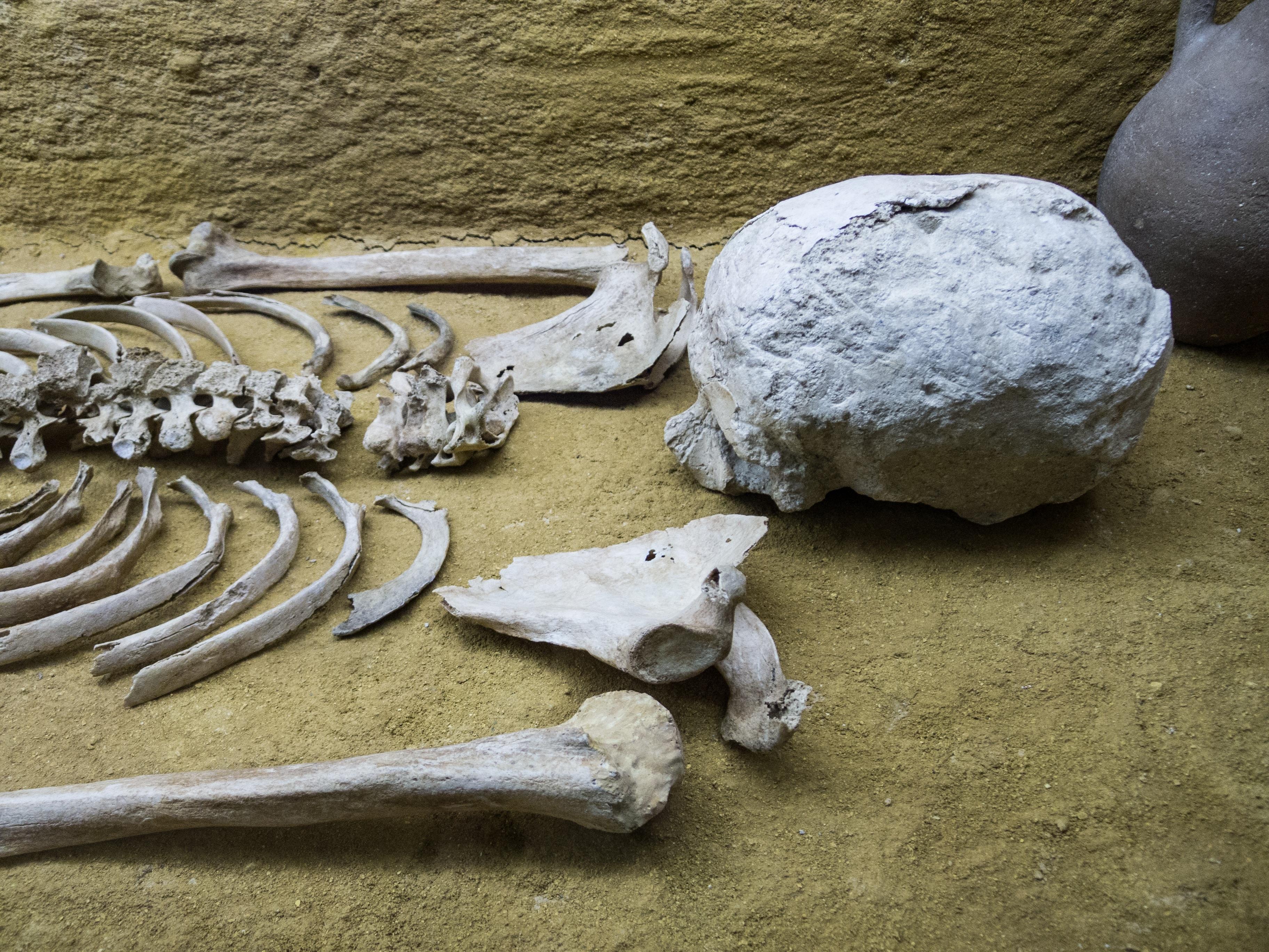 Fotos gratis : arena, rock, madera, museo, muerto, muerte, cráneo ...