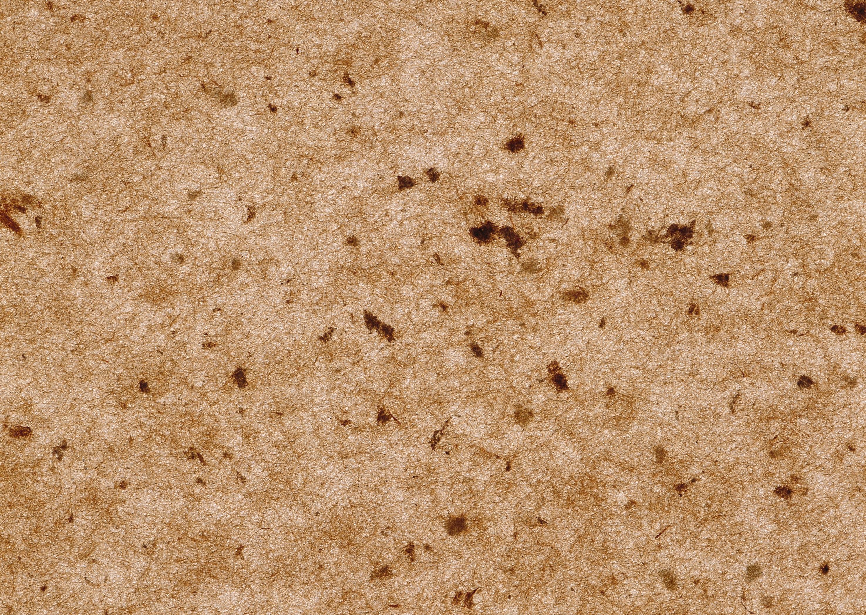 Fotos gratis arena textura piso marr n suelo corcho fondo familia de la hierba - Corcho para suelos ...