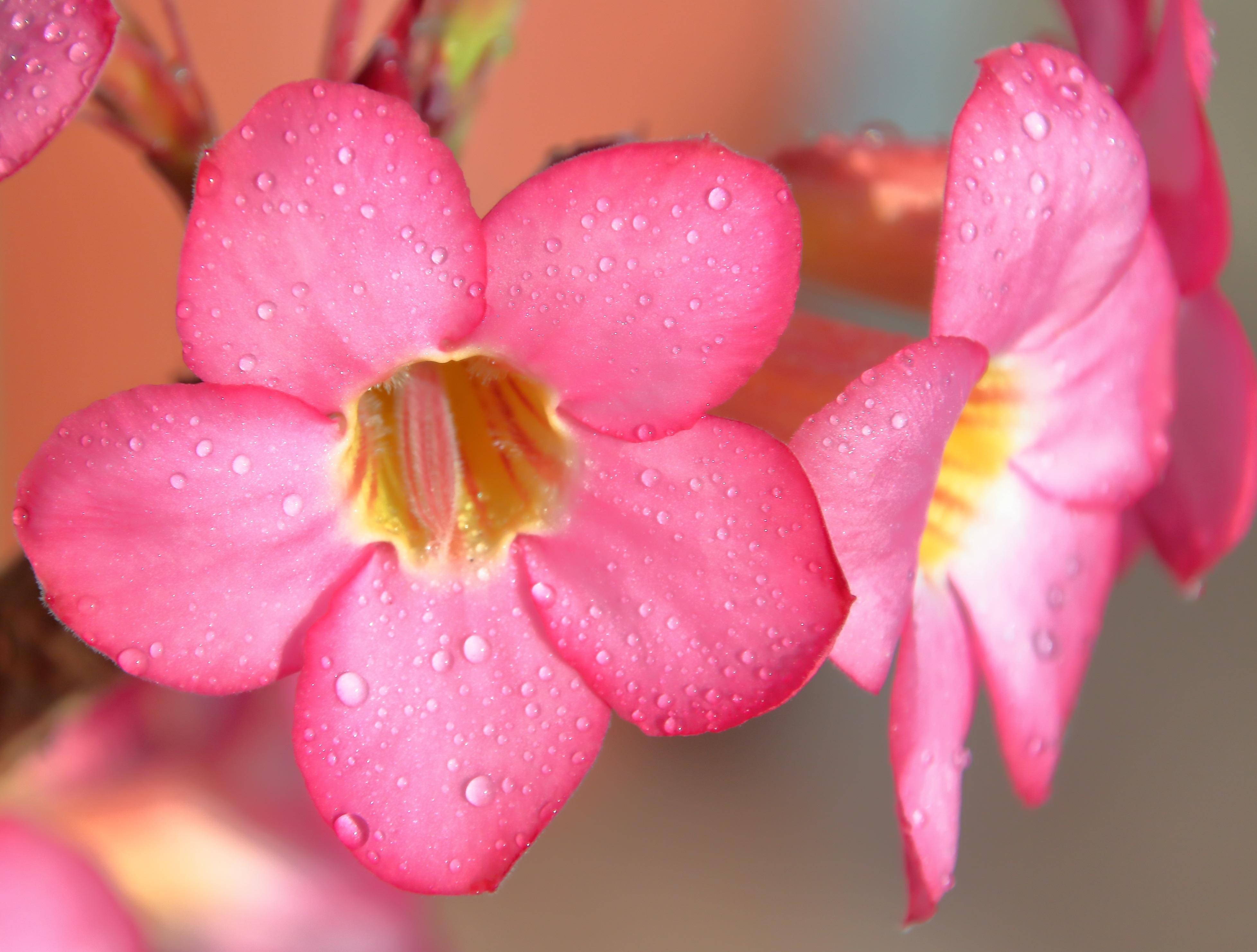Gambar Layar Air Alam Mekar Menanam Putih Hujan Daun Bunga Basah Musim Semi Hijau Warna Kuning Taman Berwarna Merah Muda Dekat Flora Bunga Bunga Bunga Liar Latar Belakang Kelopak Ungu Rosa Teratai