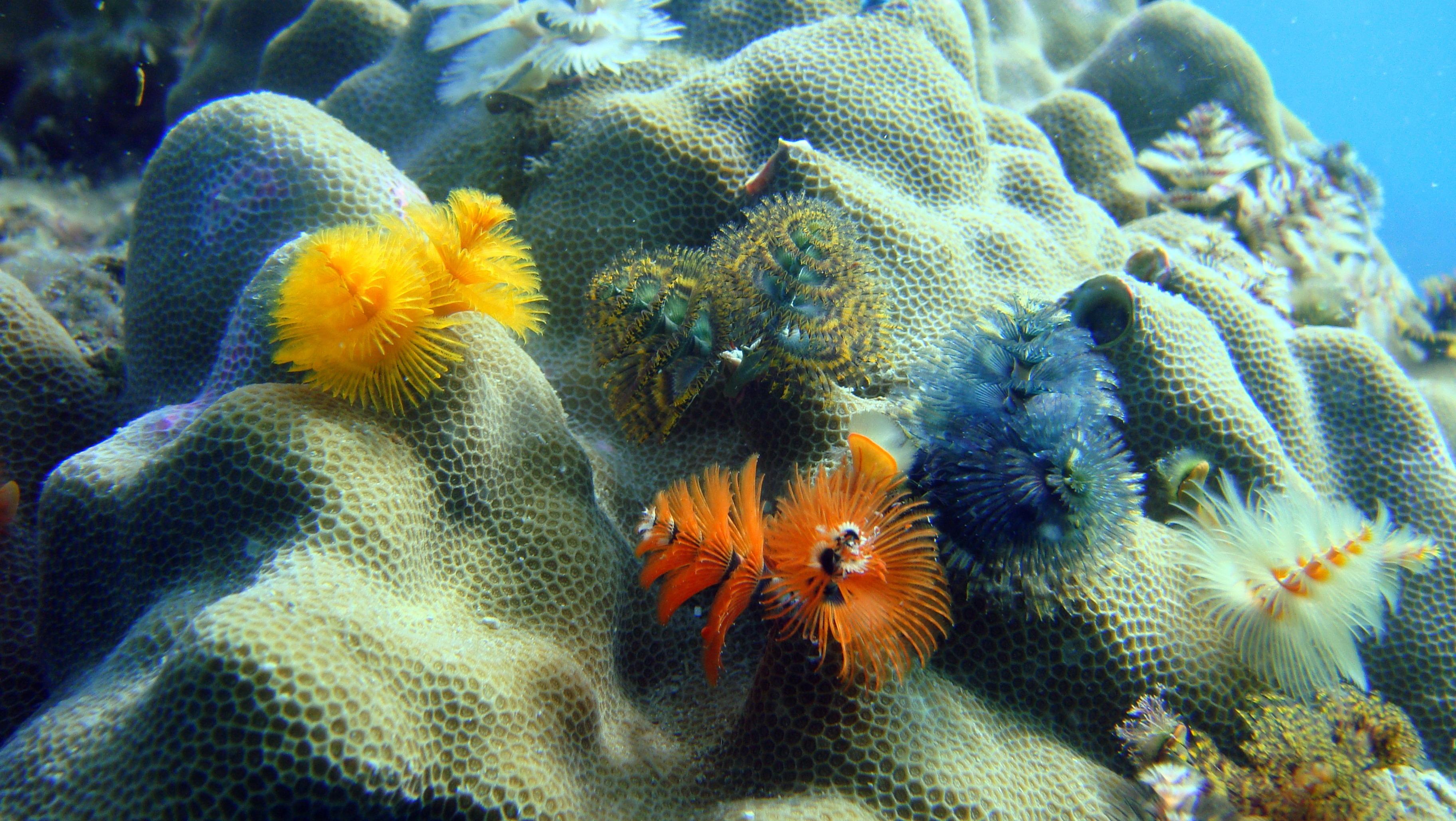 free images animal wildlife underwater tropical aquatic