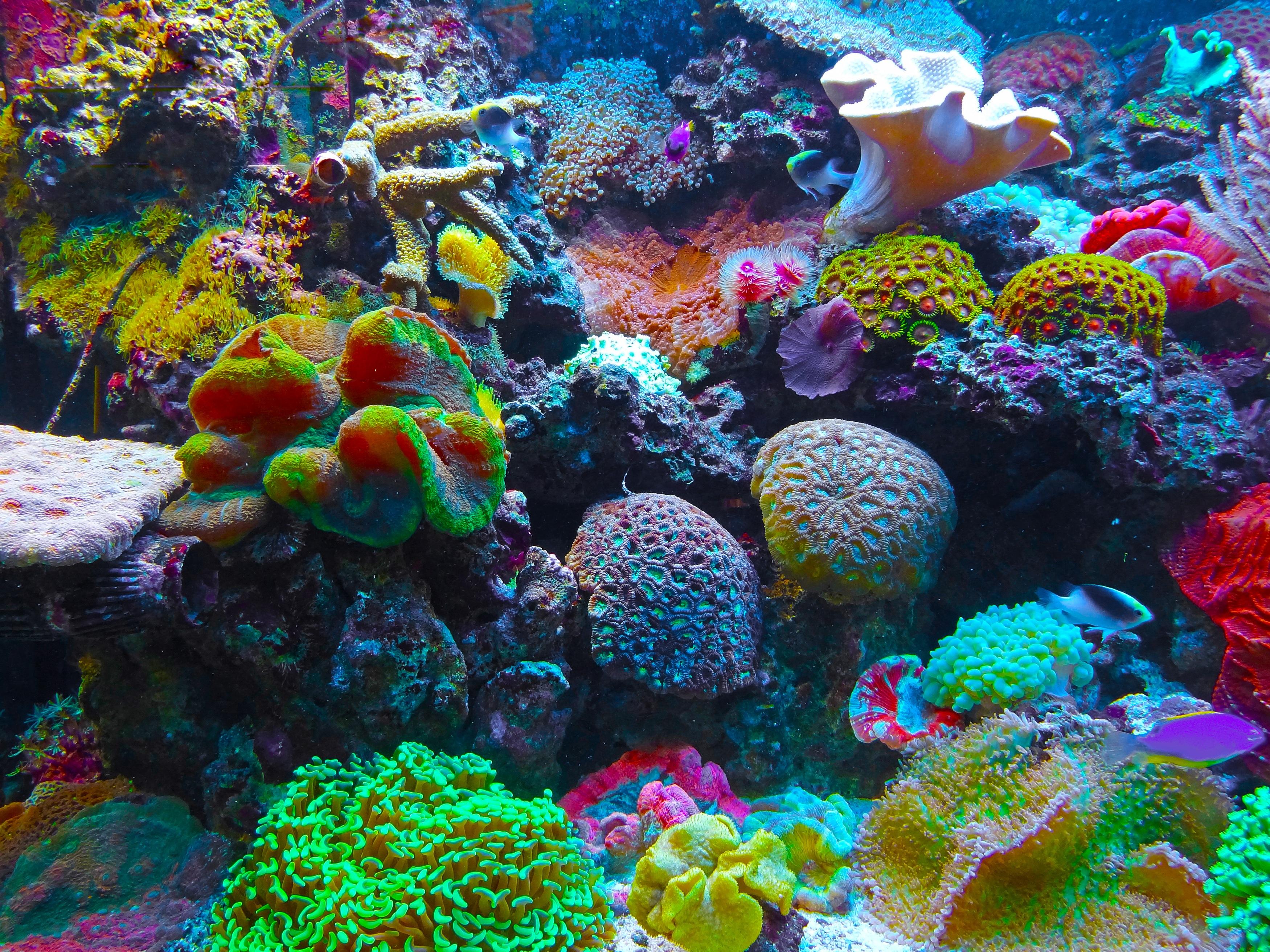 Kostenlose foto meer biologie koralle korallenriff for Salzwasser aquarium fische