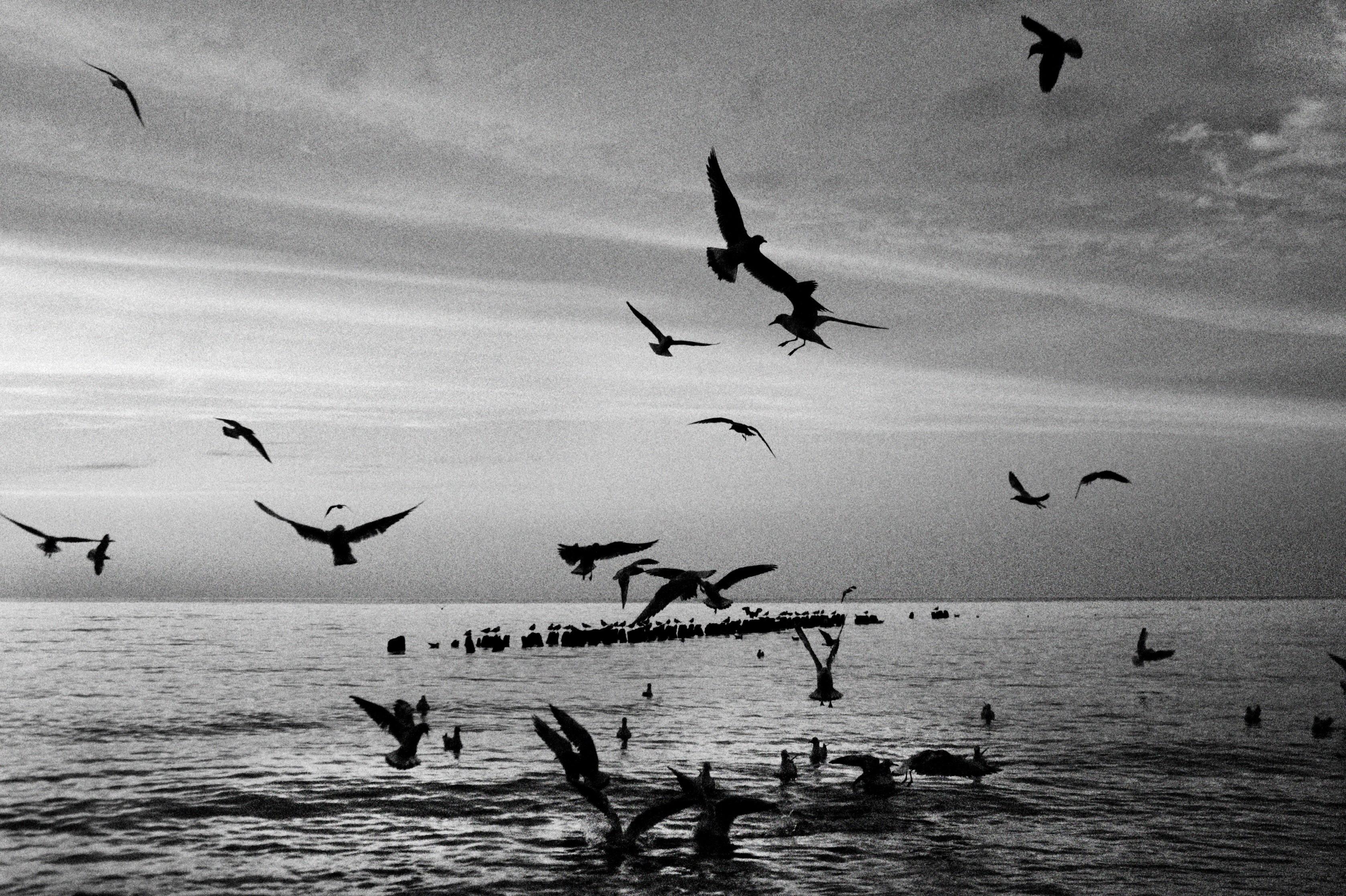Fotos gratis mar p jaro en blanco y negro ave marina reba o gaviota vuelo monocromo - Blanco y negro paint ...