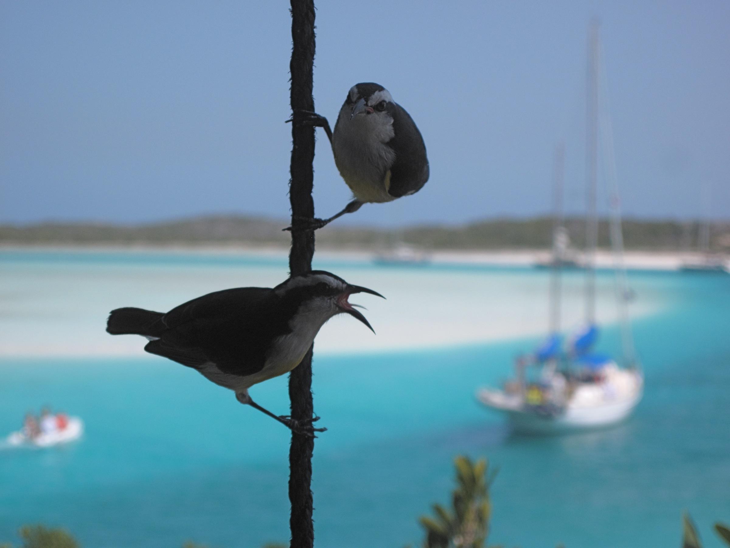 Птицы у моря звуки