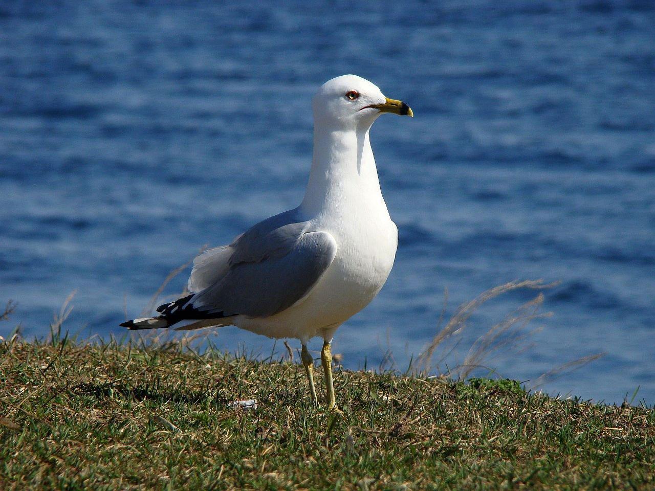 желаю, чайка фото птица моя