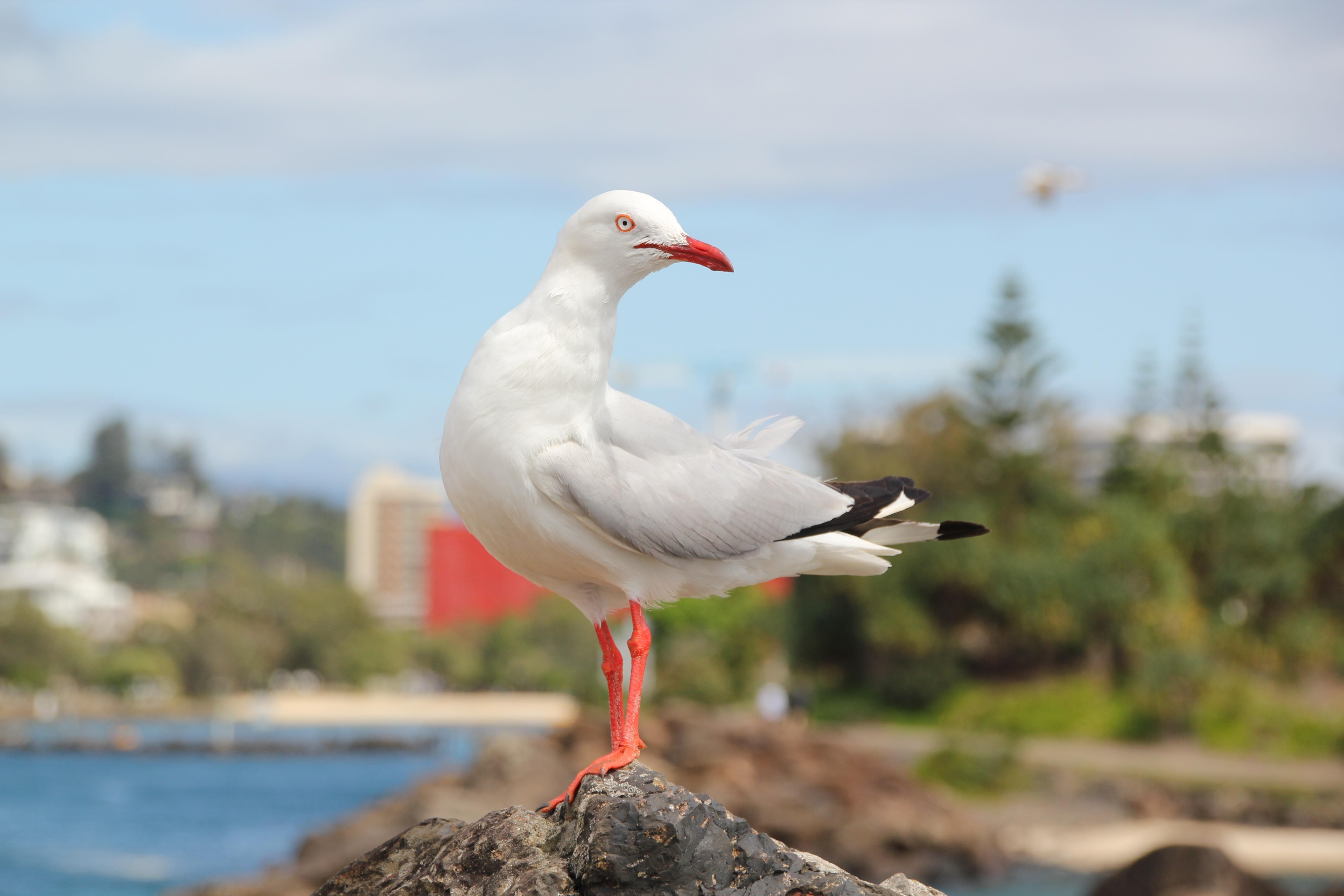 Ζεστό για να πάρει ένα μεγάλο πουλί