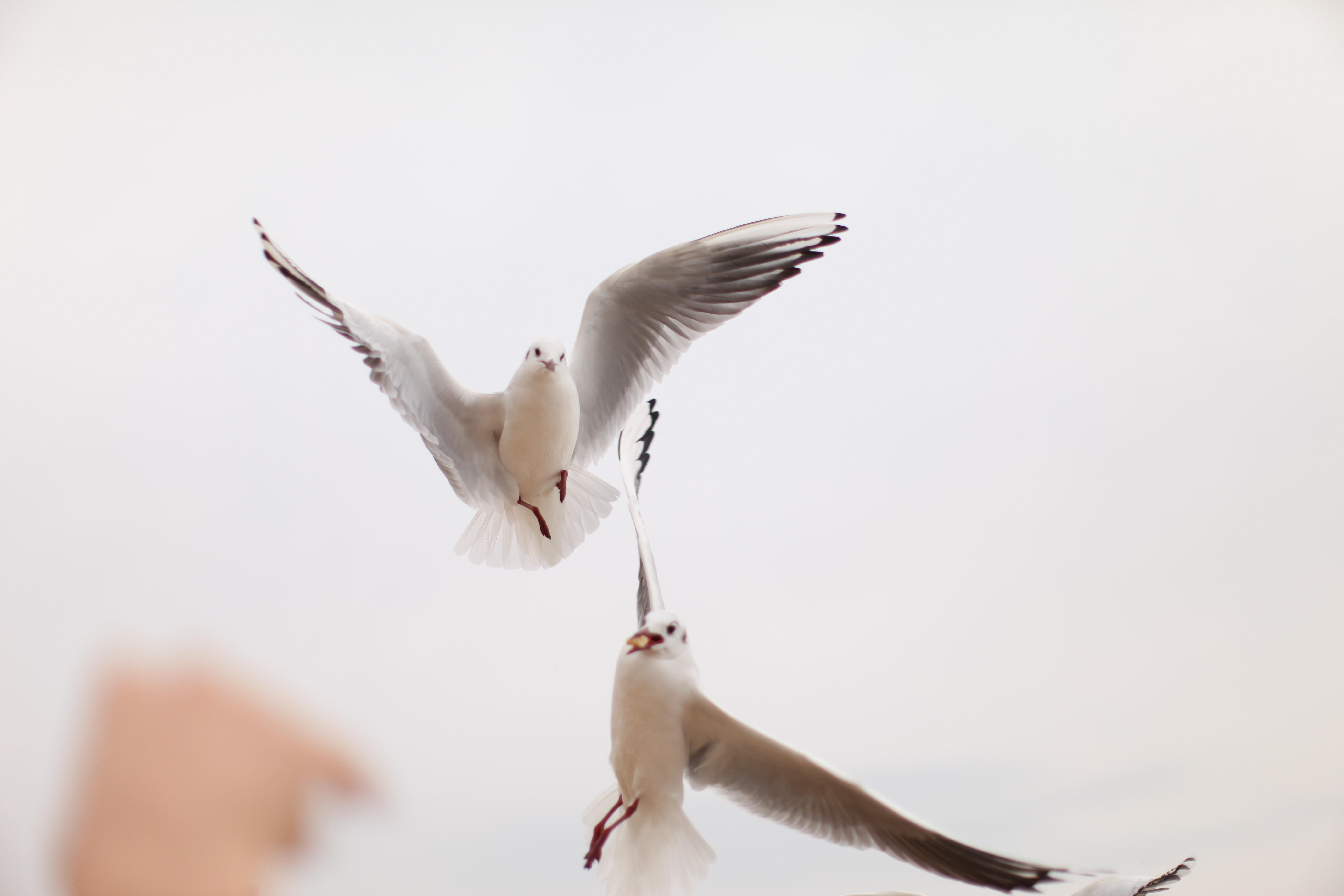 фразу картинки чайка и новый год избежать
