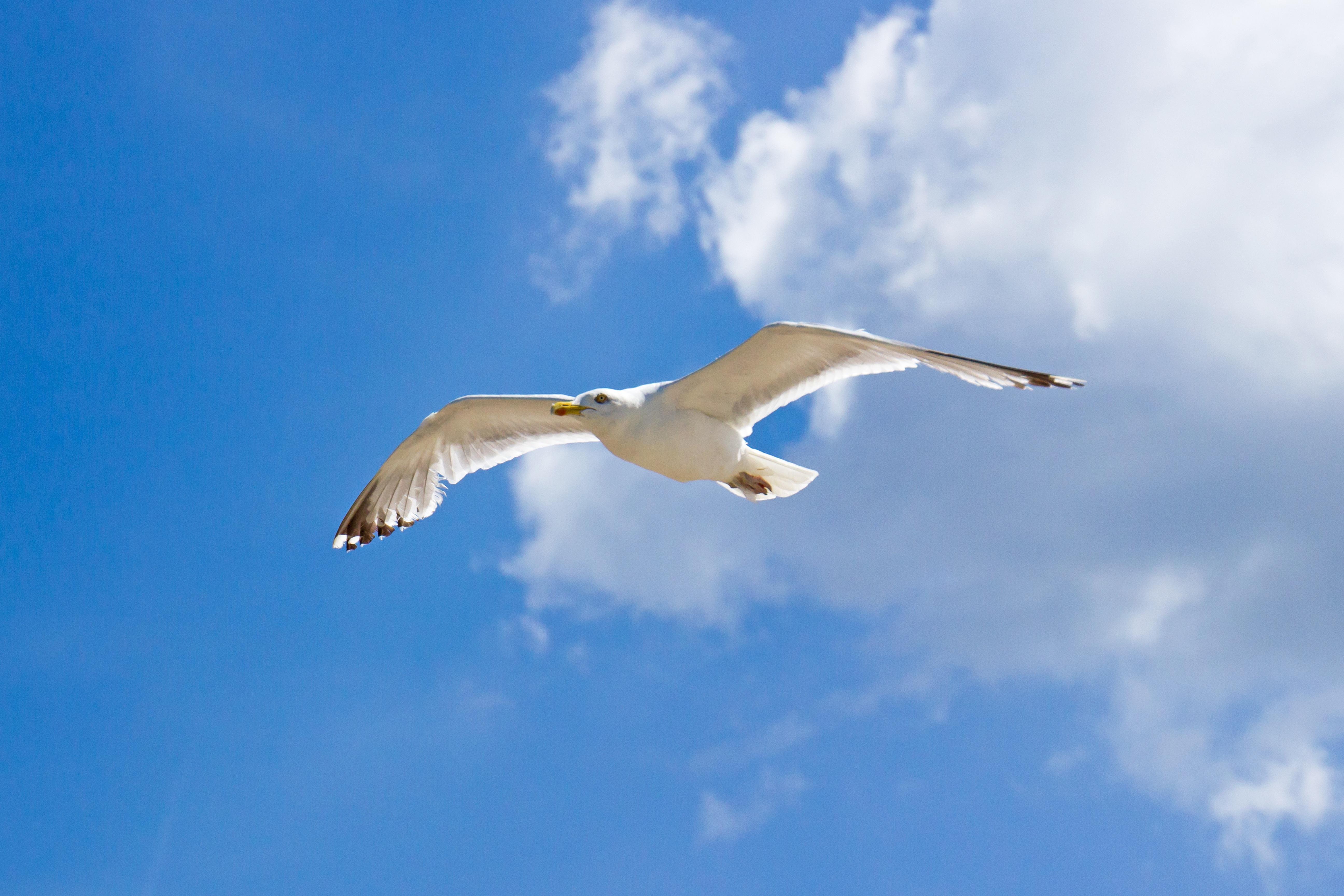 Птица парит в небе картинки