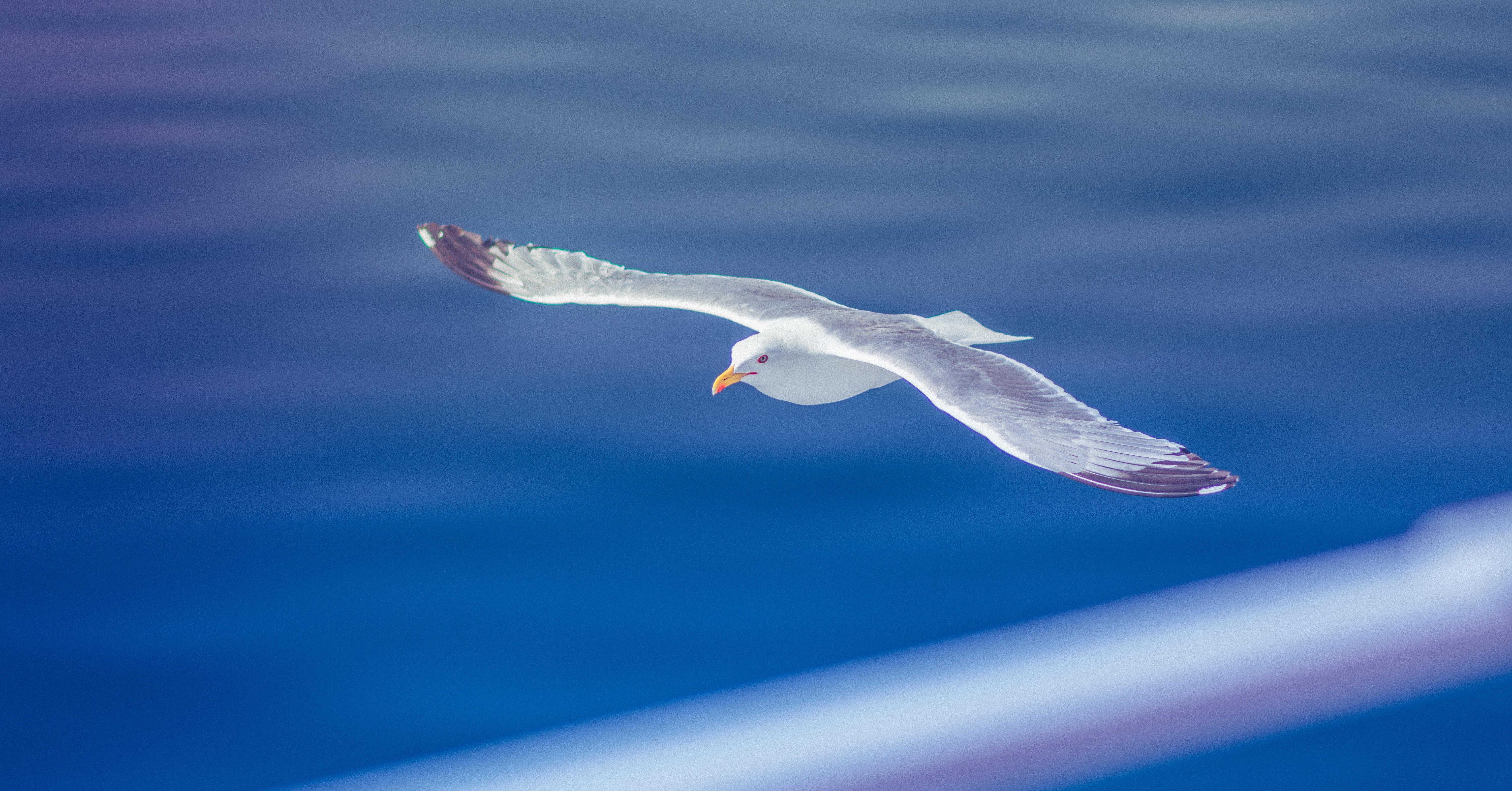 потолки фото морская чайка в полете высокого качества свадьбе просто выпечка