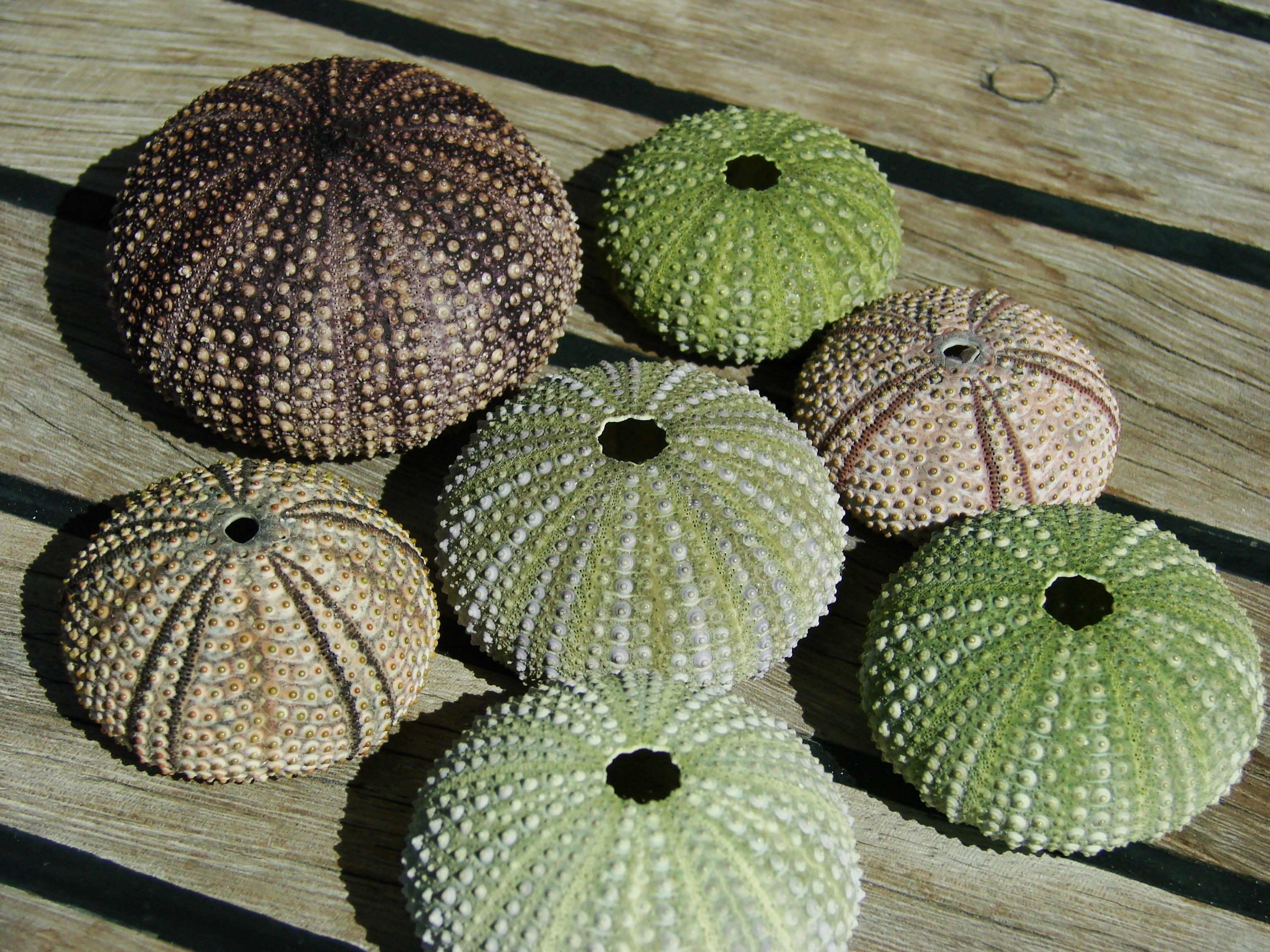 Fotos gratis : cactus, hoja, flor, patrón, comida, verde, Produce ...