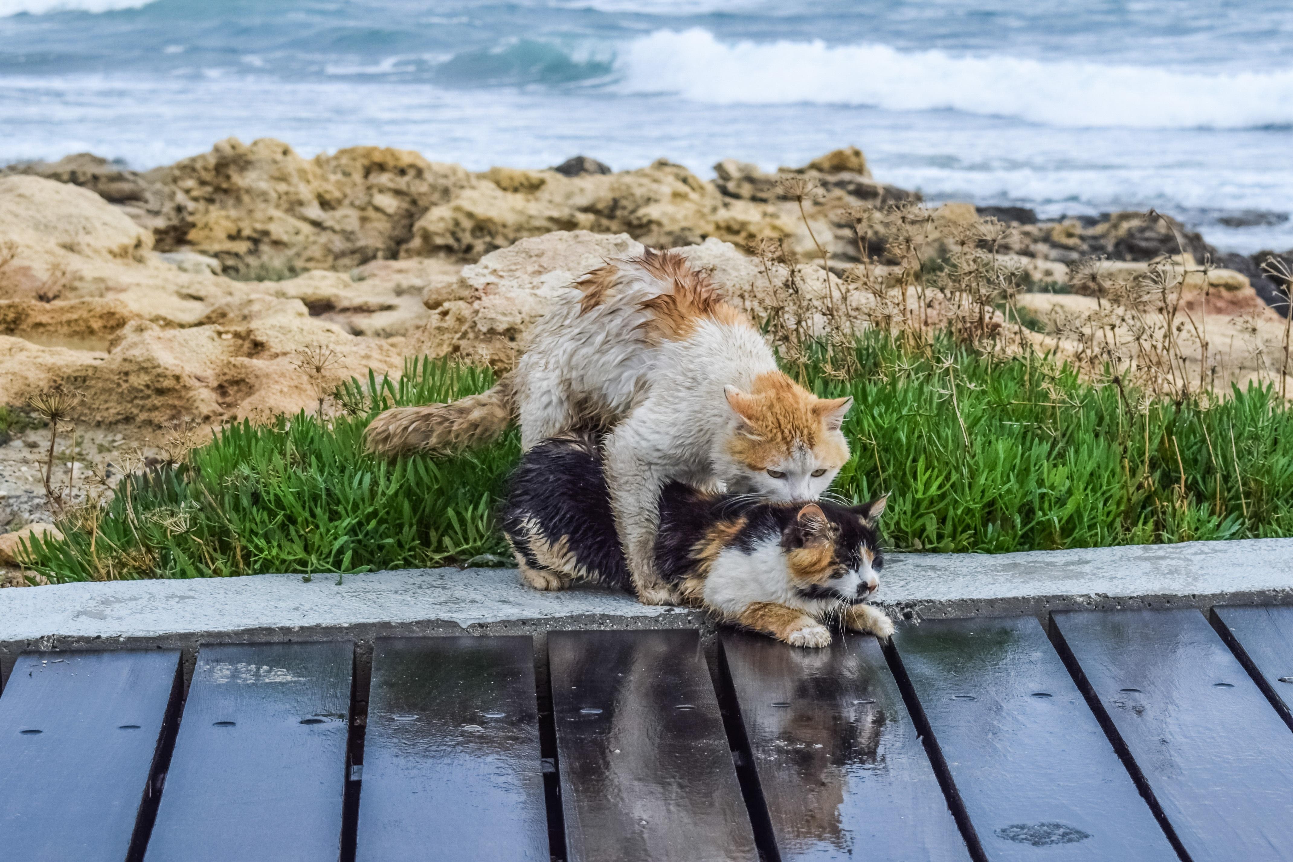 Скачать море коты