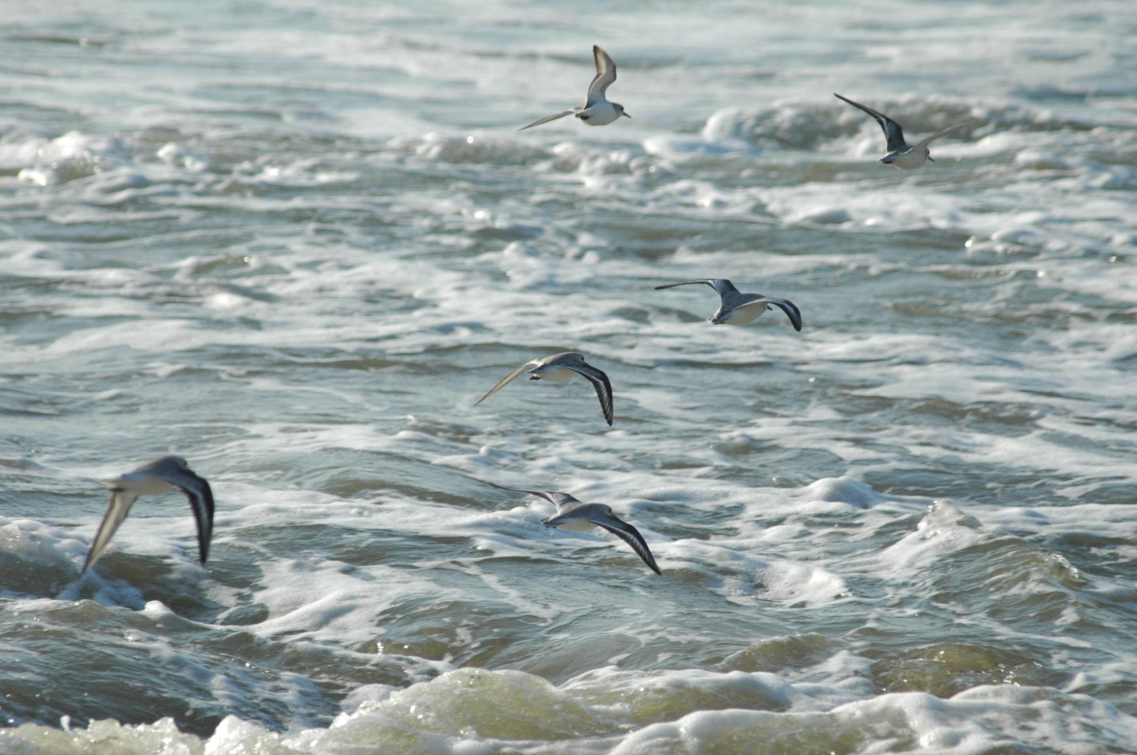 Добрый вечер, картинки море дельфины чайки