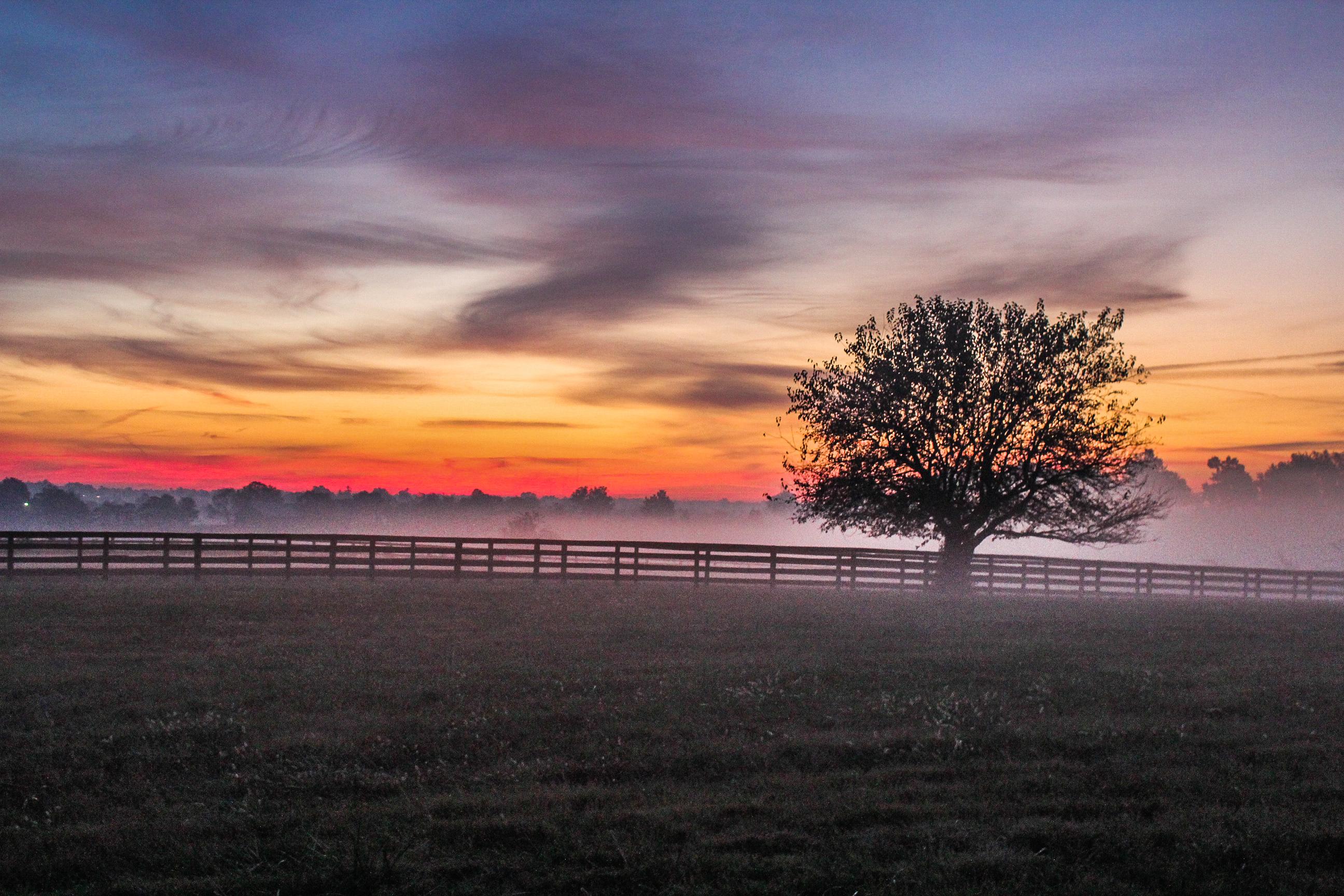 free images : sea, coast, tree, horizon, fence, cloud, sun, fog