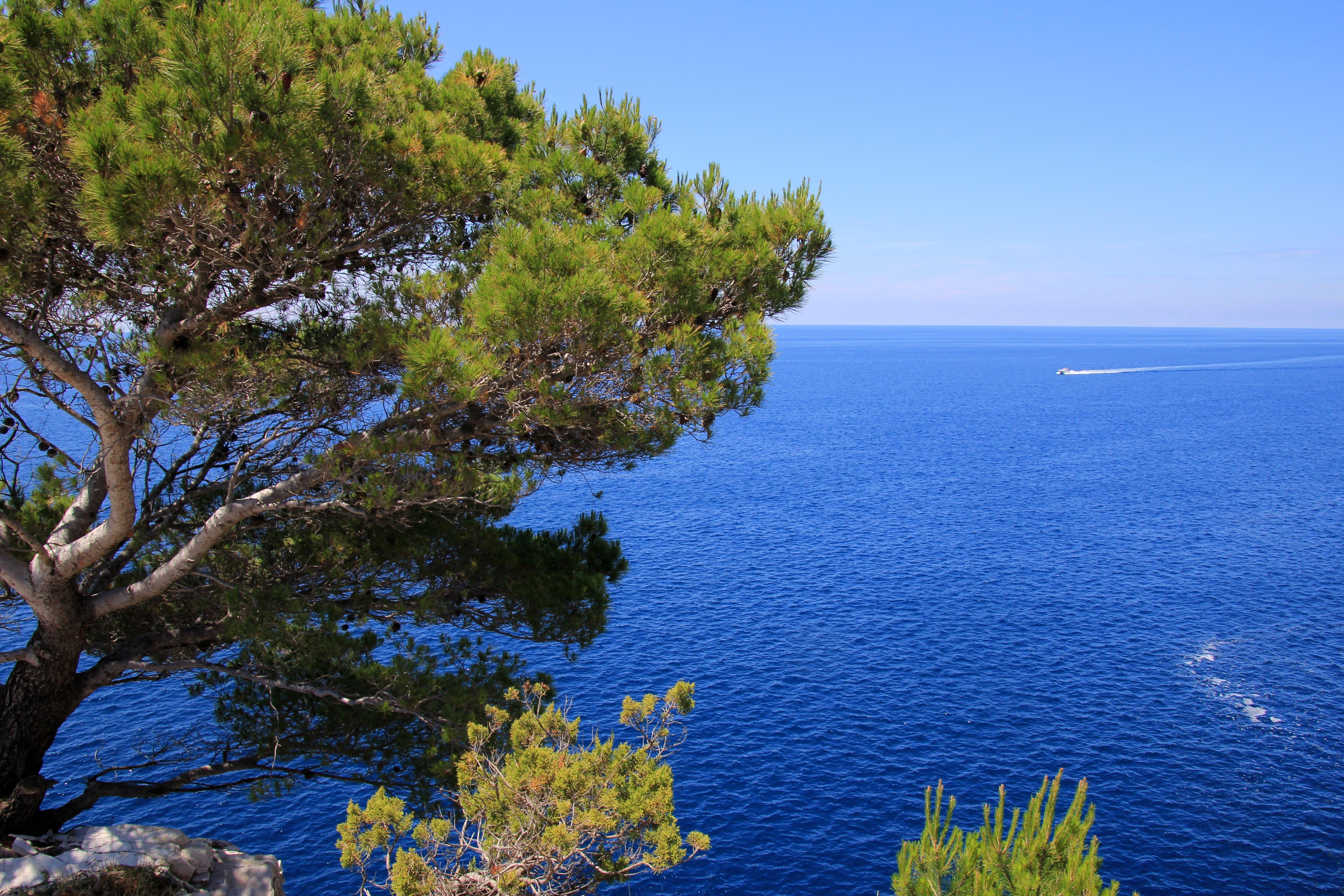 Images gratuites c te arbre eau plante rive fleur for Images gratuites fond ecran mer
