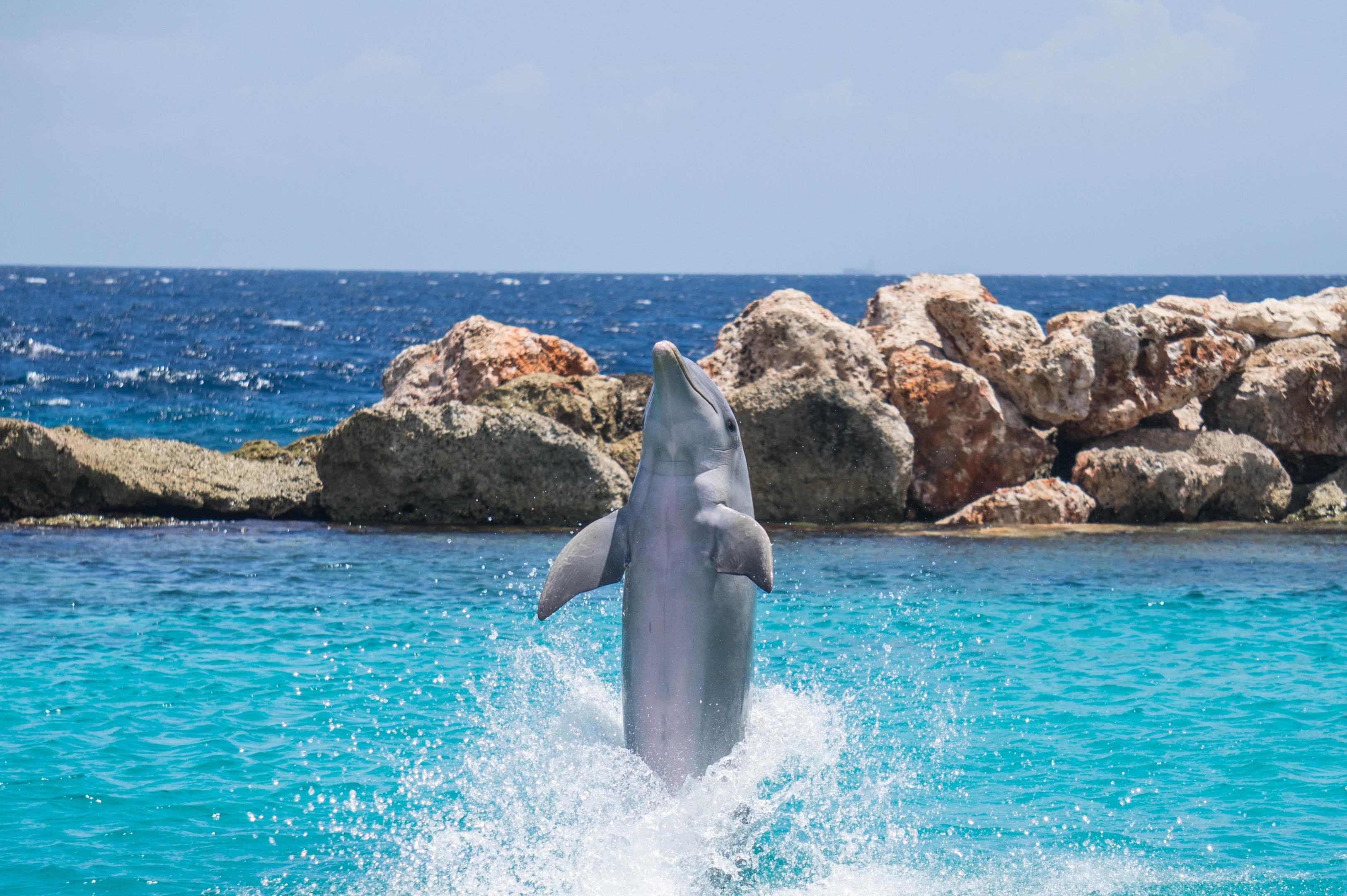 Fotos gratis mar costa agua naturaleza Oceano mojado
