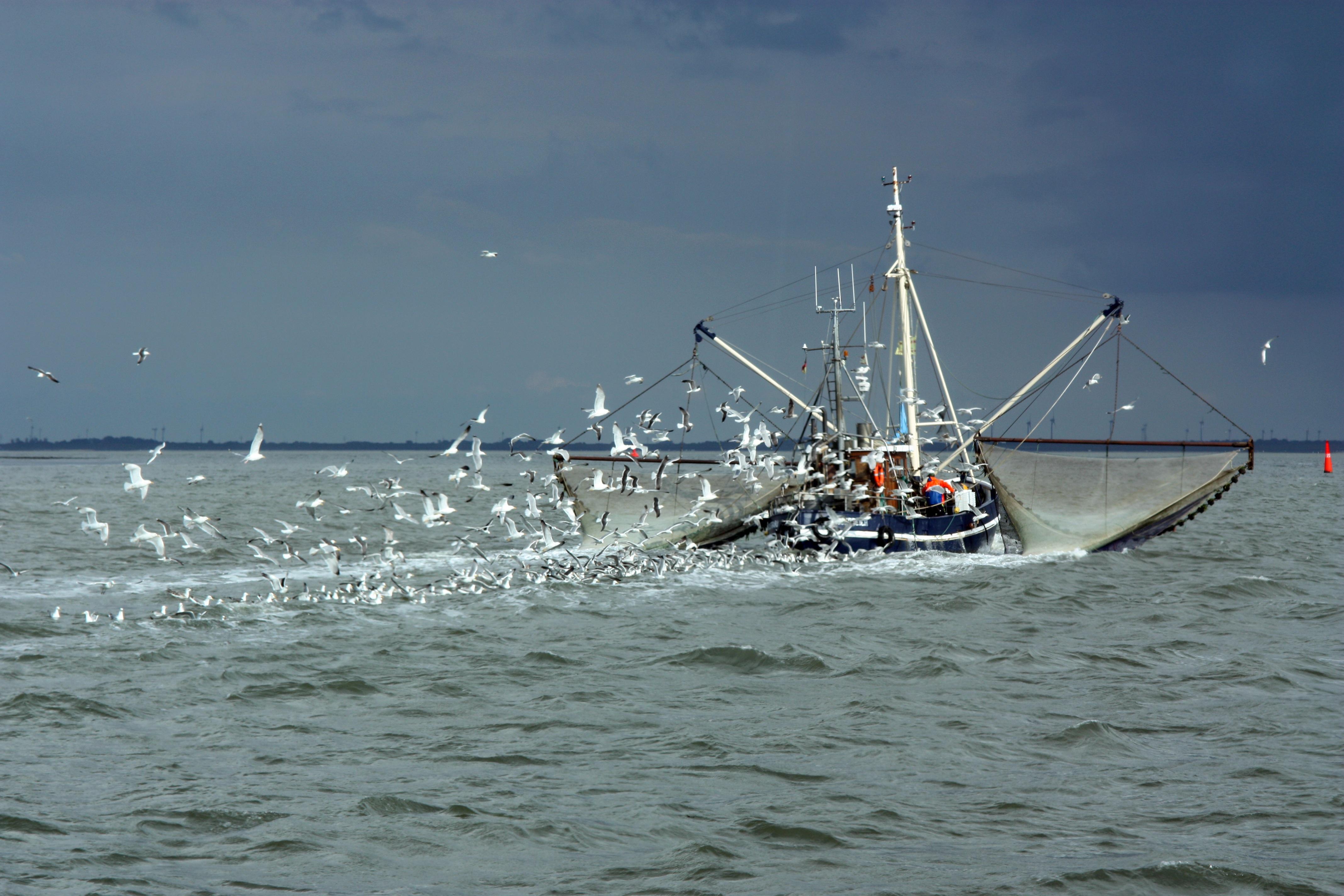 гранола картинки судно рыба картины ломают