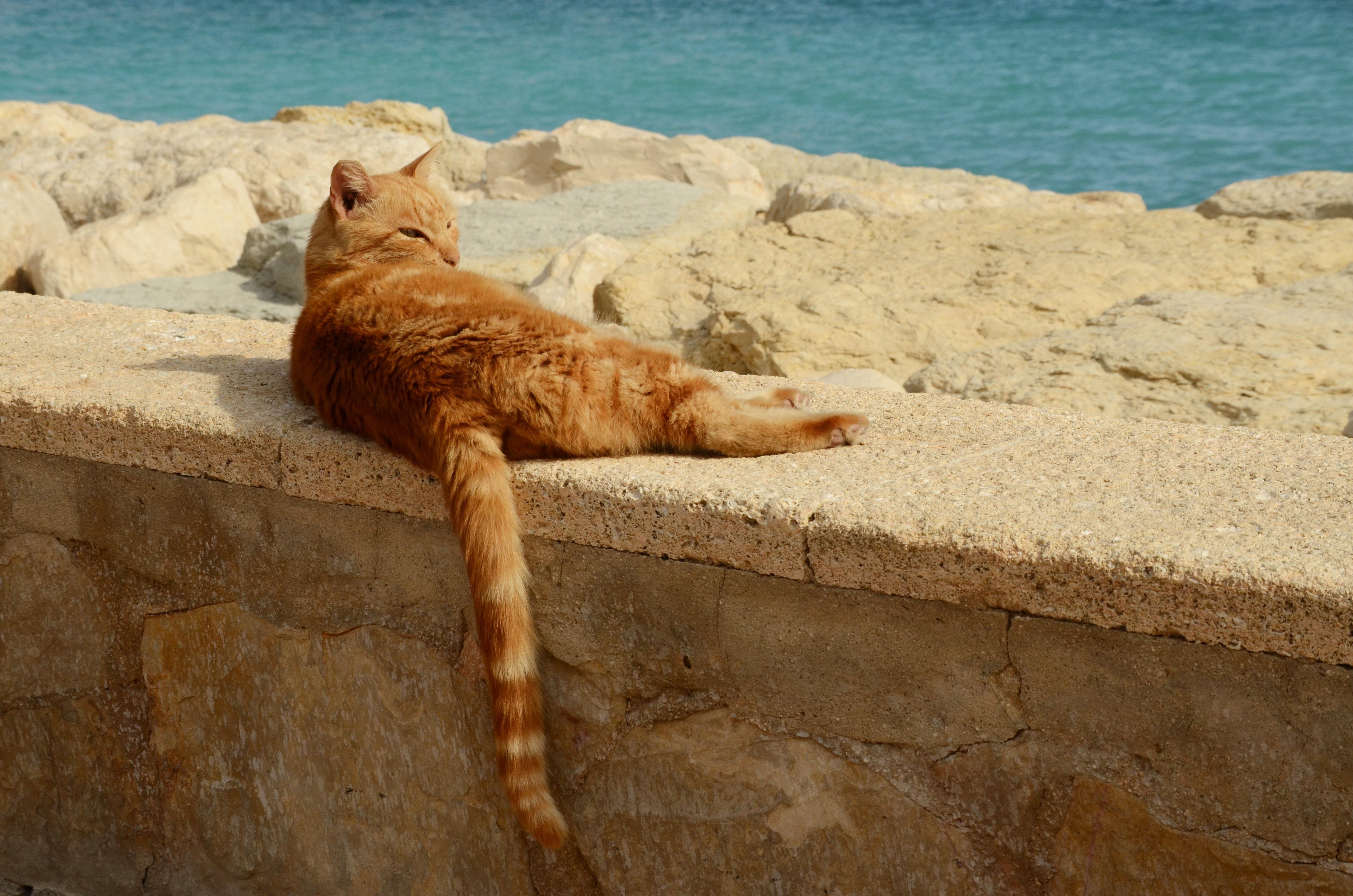 Отдыхающий котик фото