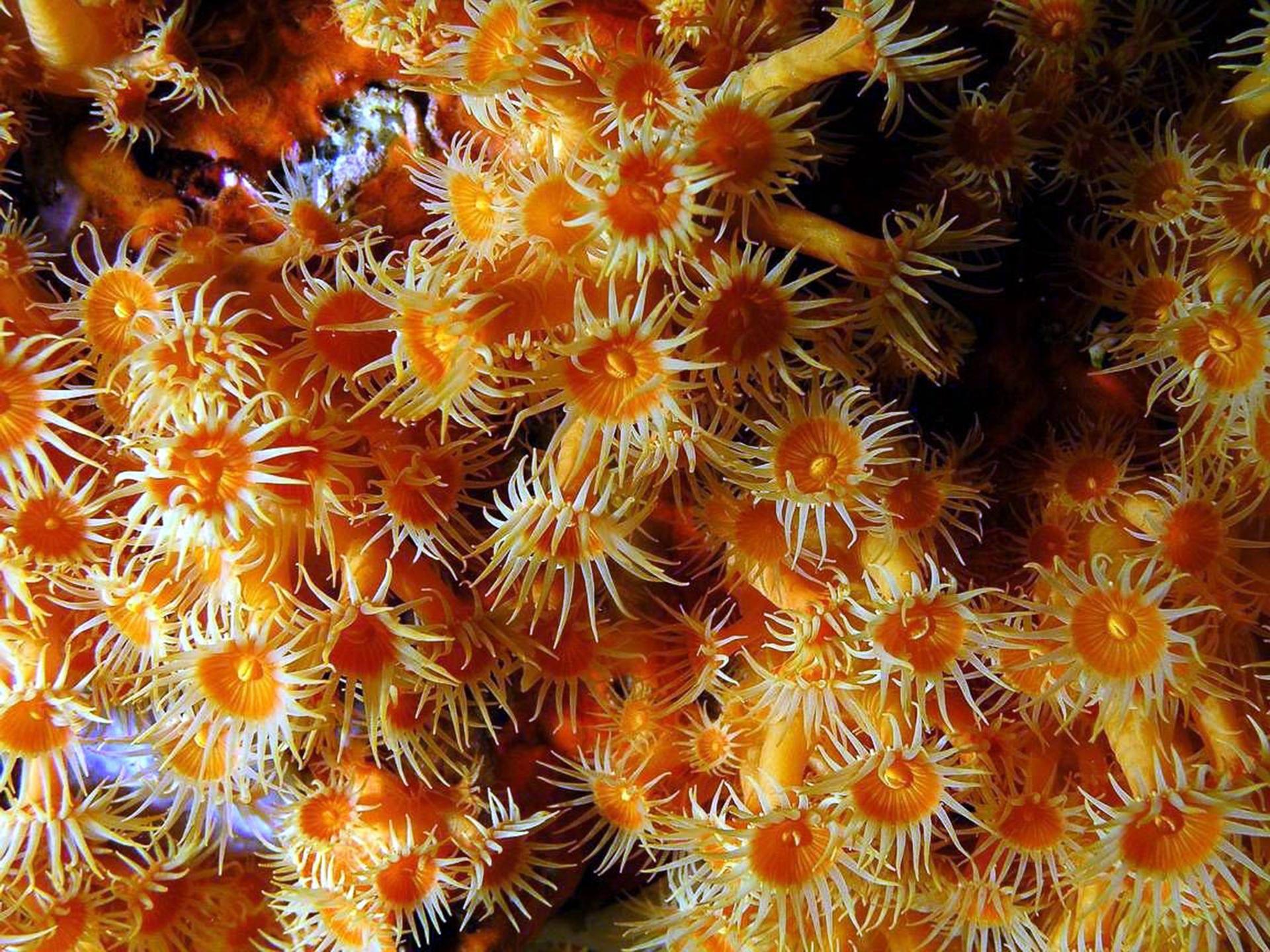 Koral Farbe kostenlose foto meer blume unterwasser mittelmeer farbe