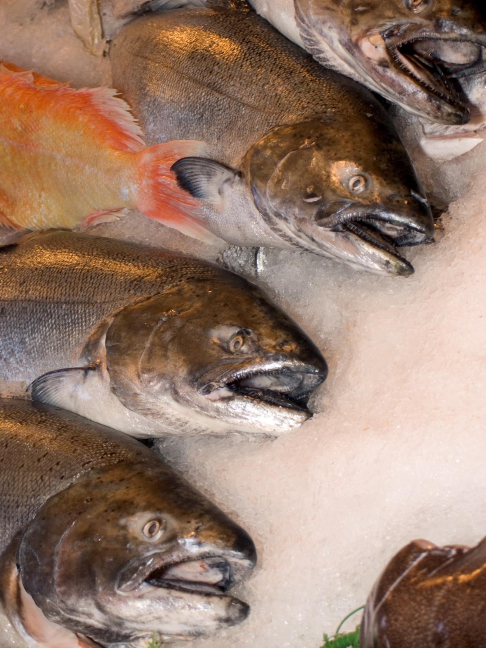 Fotoğraf Gıda Balık Tutma Taze Piyasa Suda Yaşayan Balık