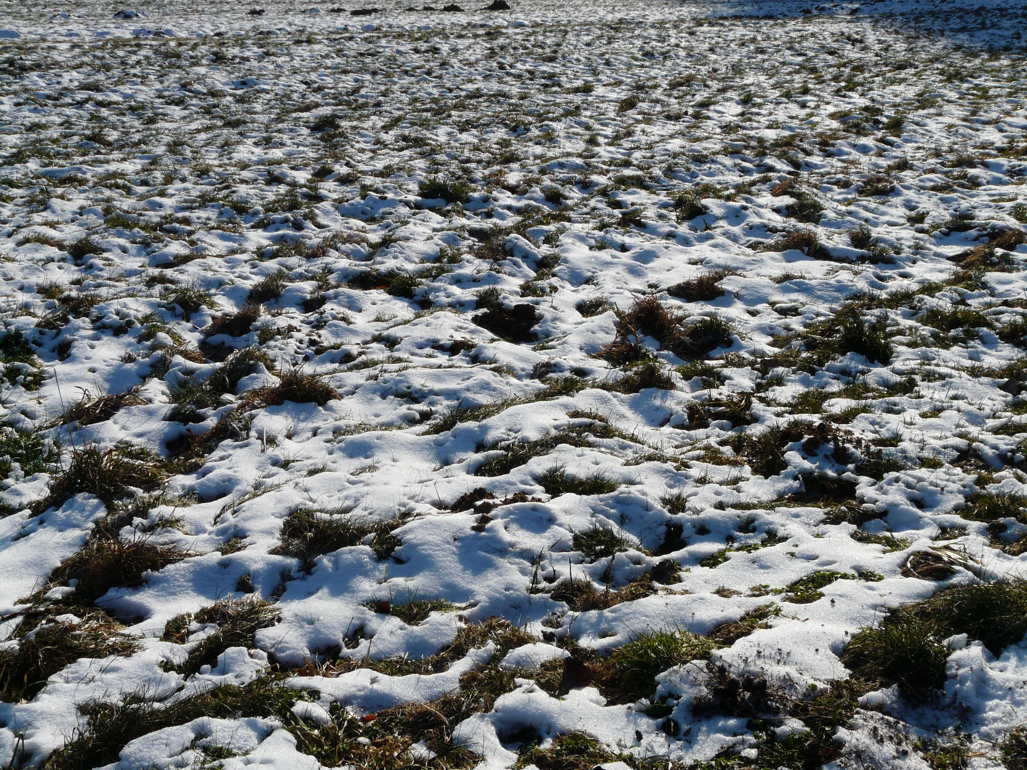 Картинка снег серый лед
