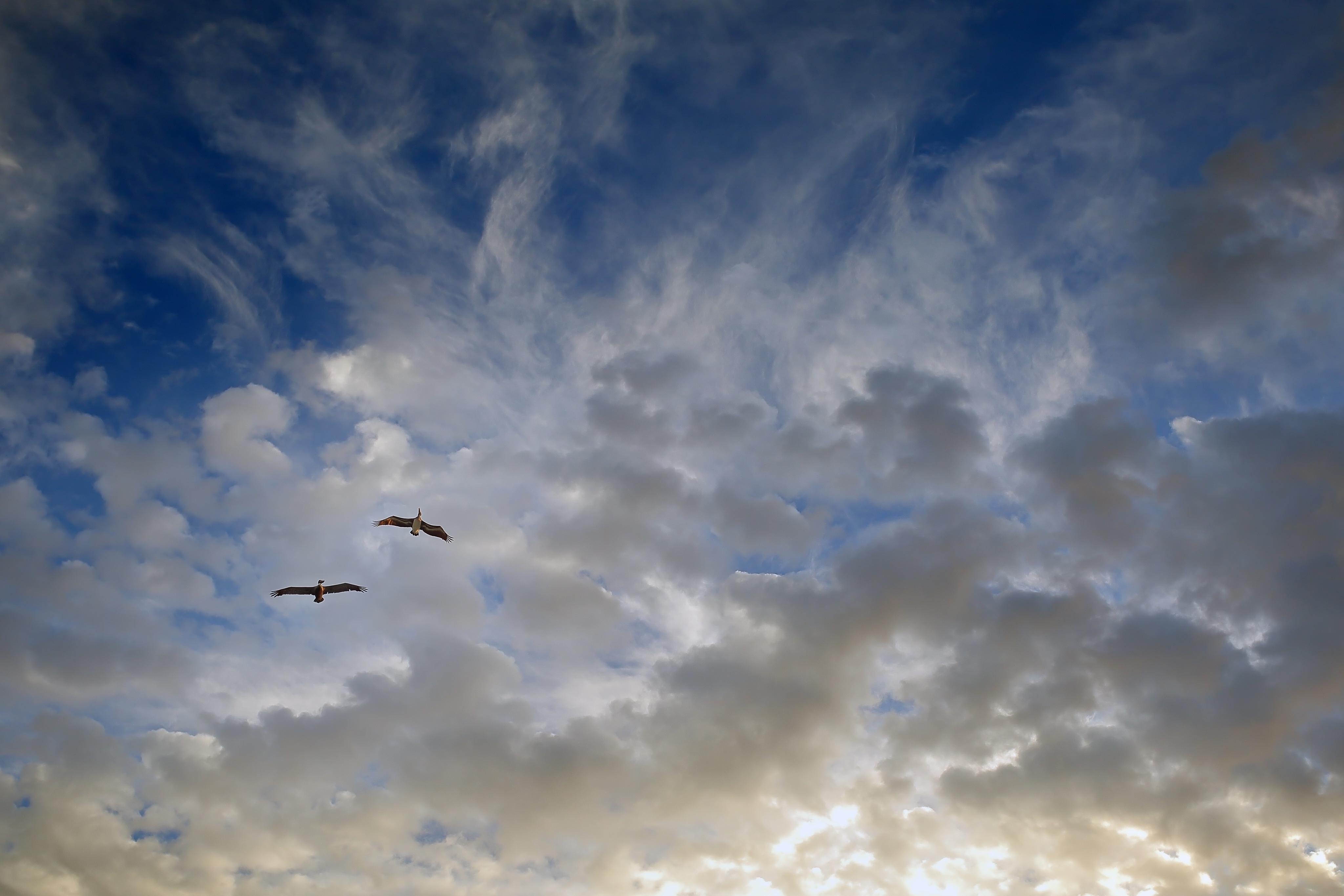 фото небо птицы облака меня только один