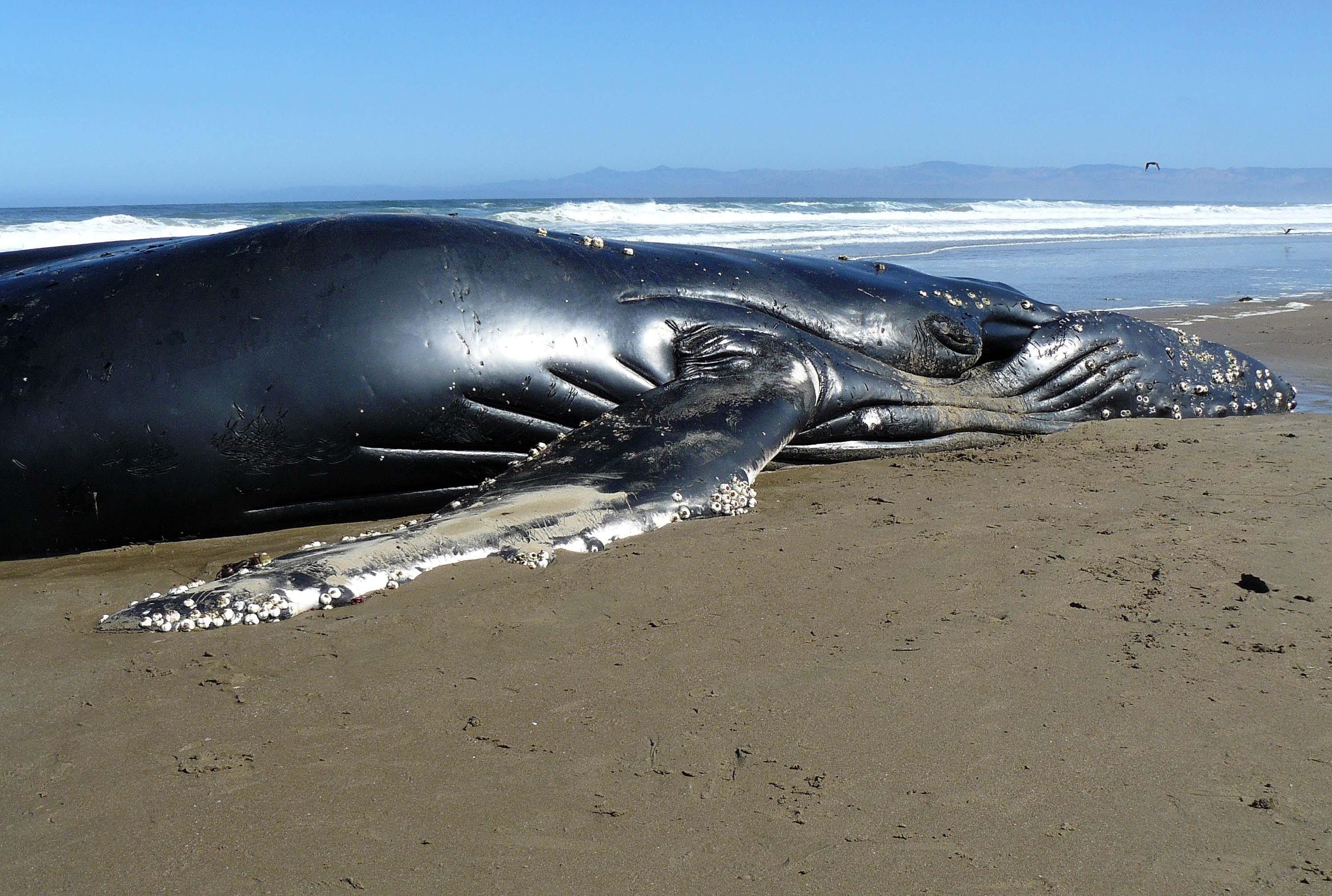 кит выбросился на берег картинка площадке маша всегда