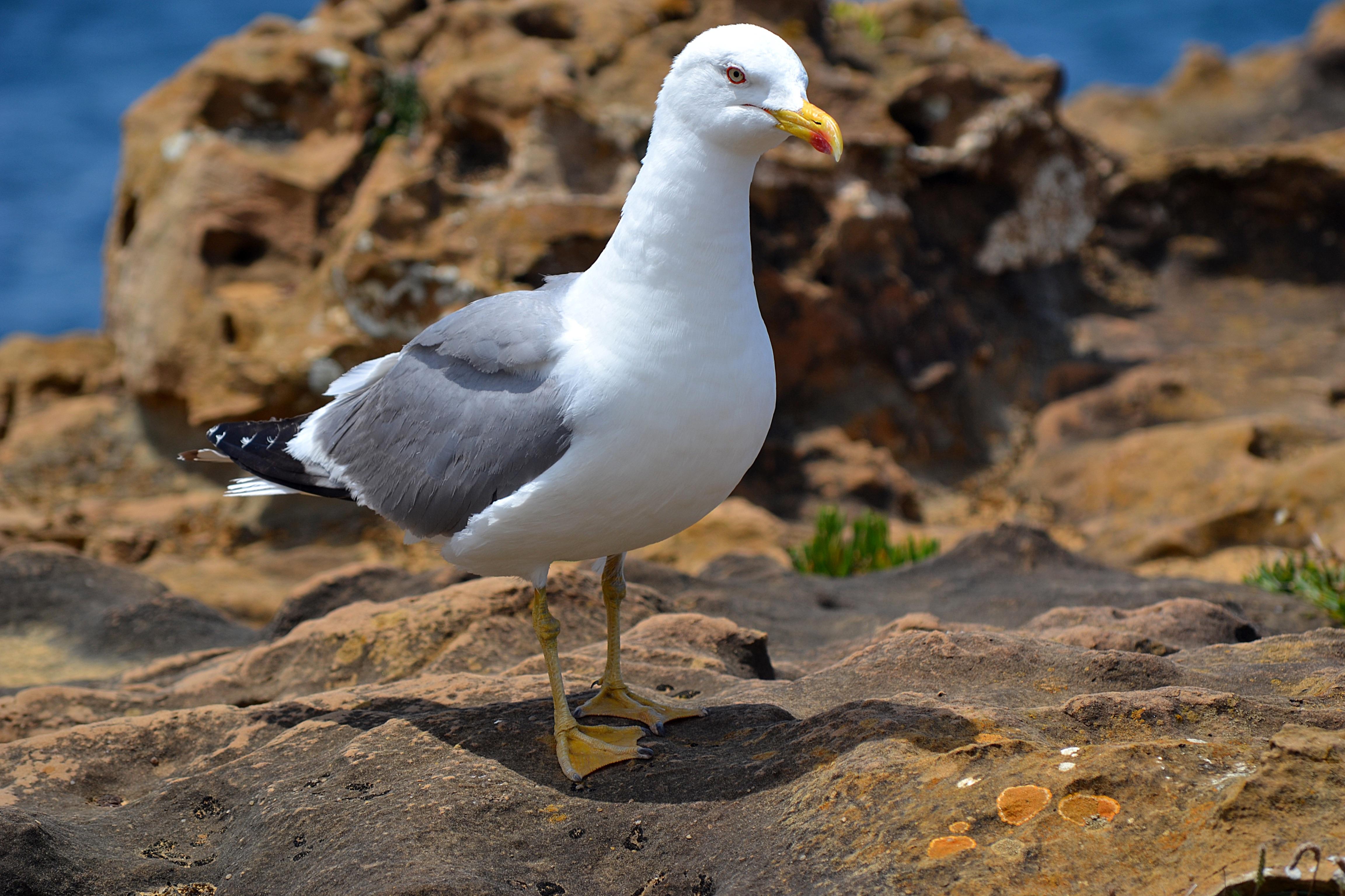 этот фото птицы альбатрос большой мощности