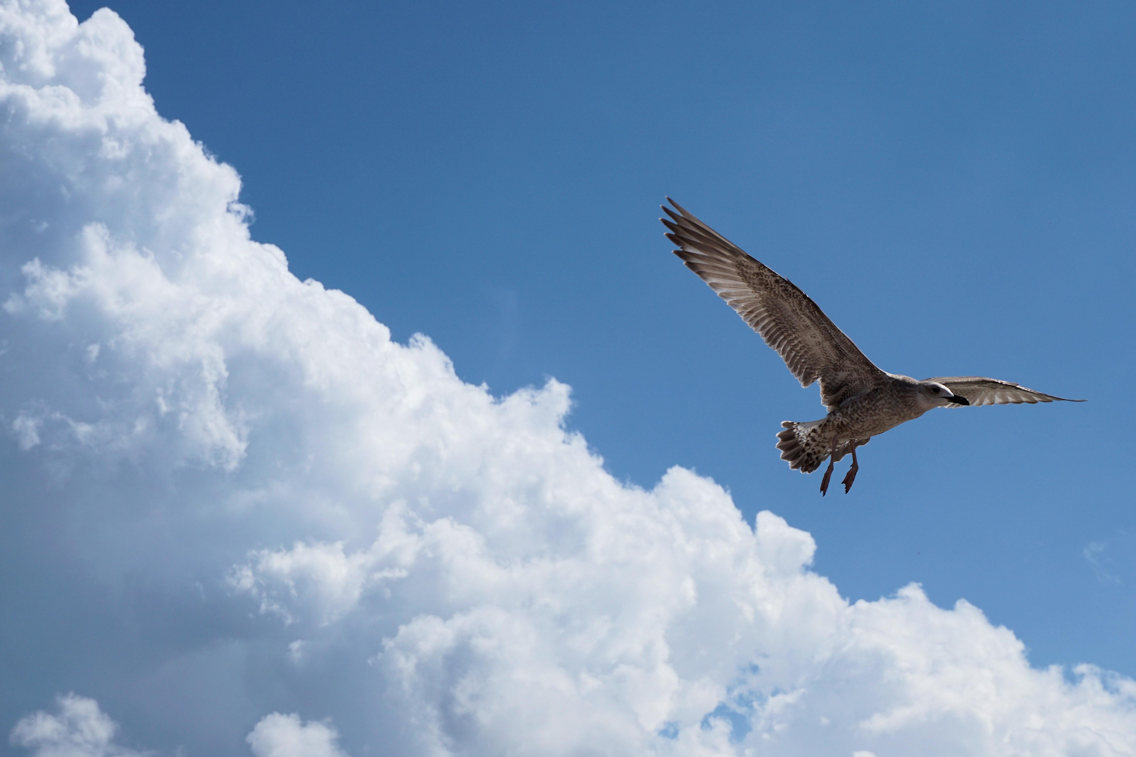 95+ Gambar Burung Rajawali Putih Gratis
