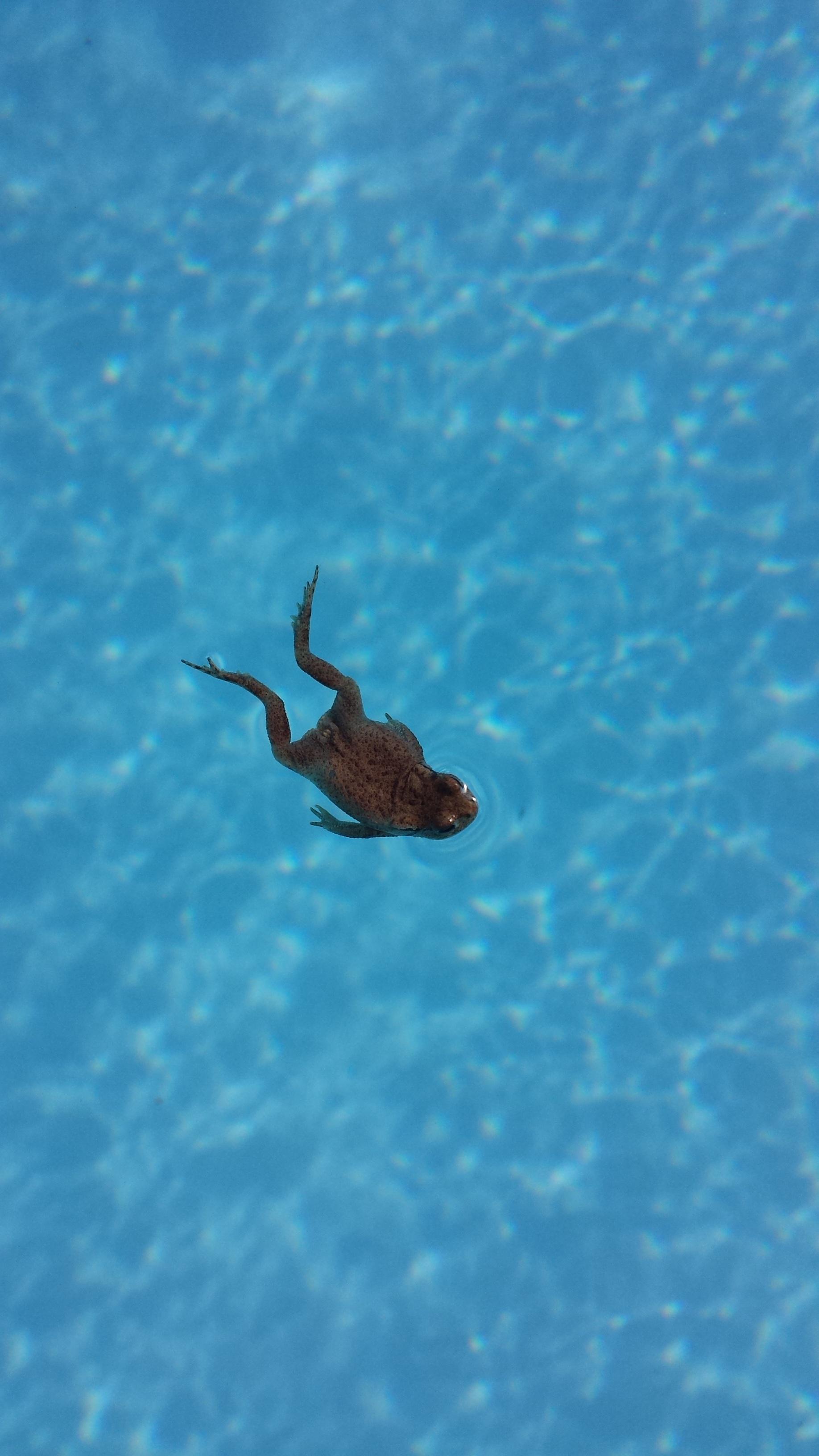 Free Images : nature, ocean, summer, underwater, swimming ...