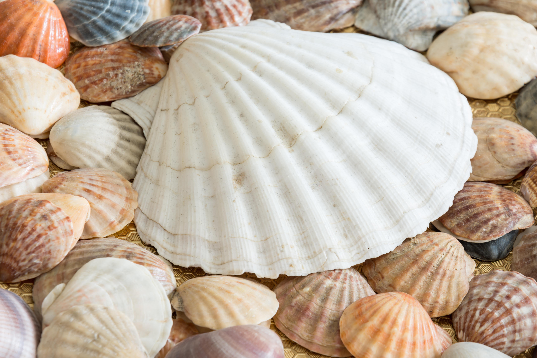 Fotos gratis : naturaleza, Oceano, textura, verano, patrón, plato ...