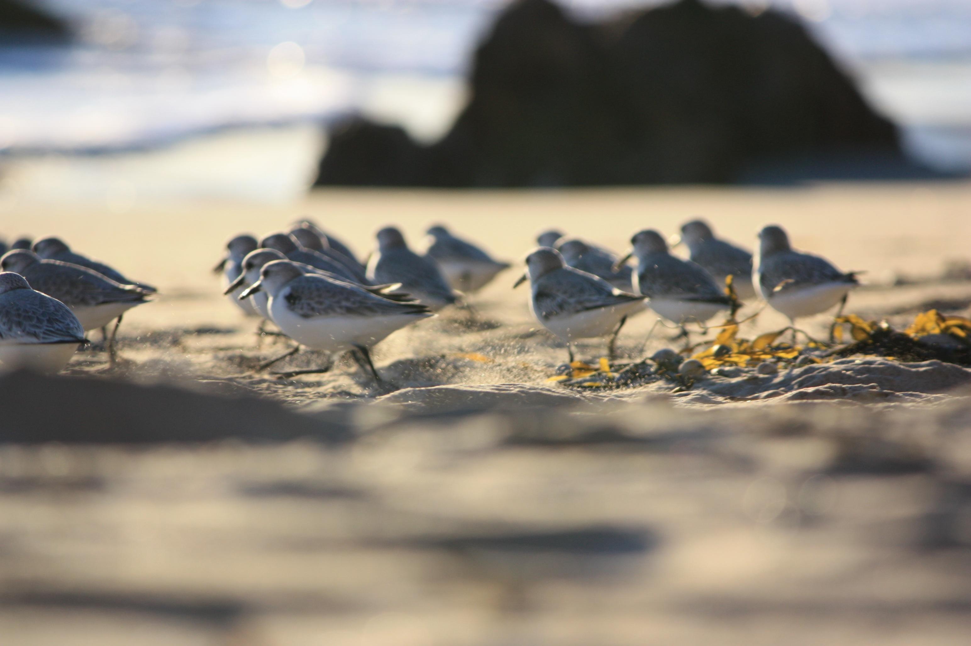 акрил картинки с птицами на природе с морем слива