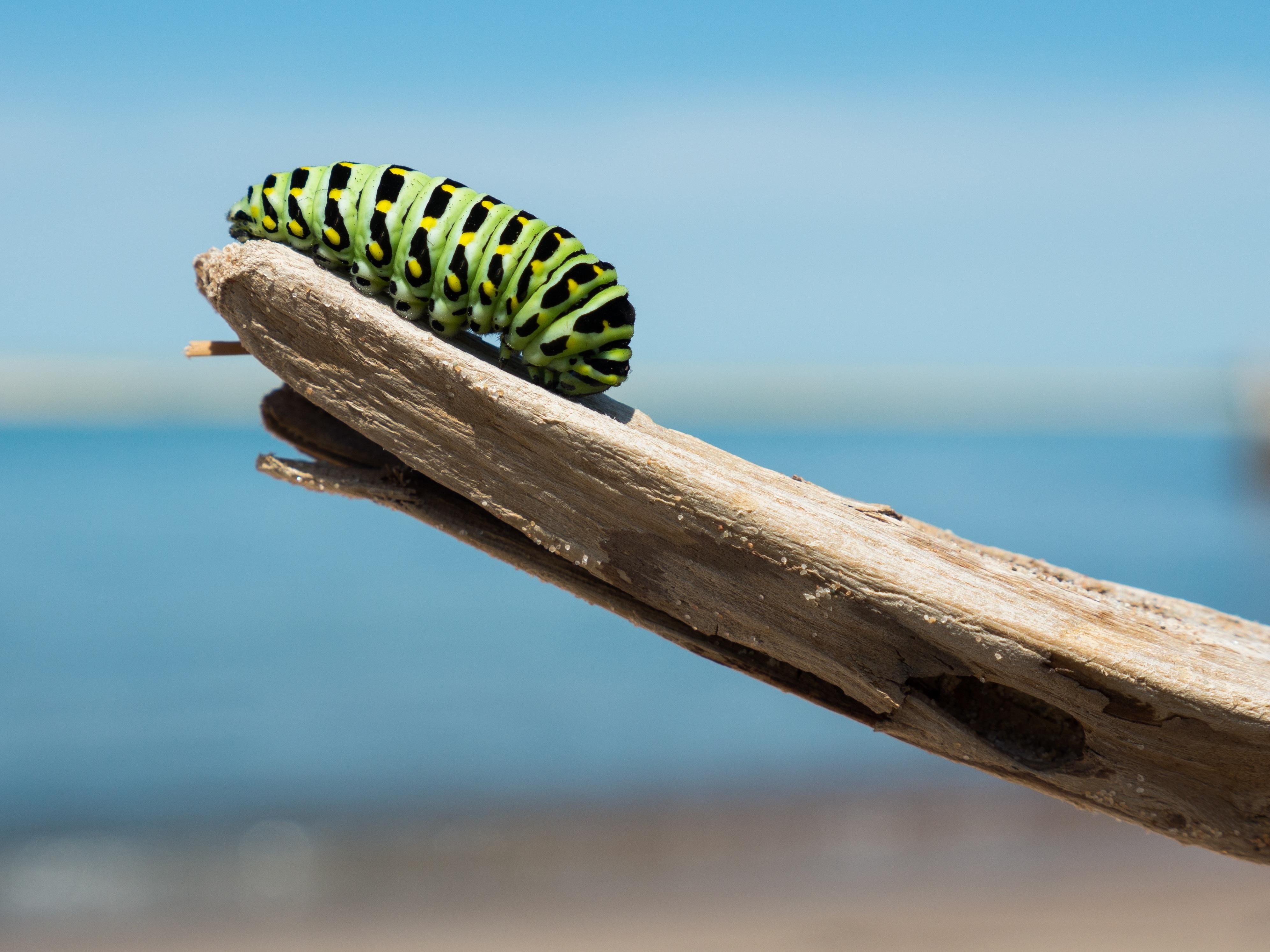 Fotos gratis : mar, arena, rama, madera, fotografía, hoja, animal ...
