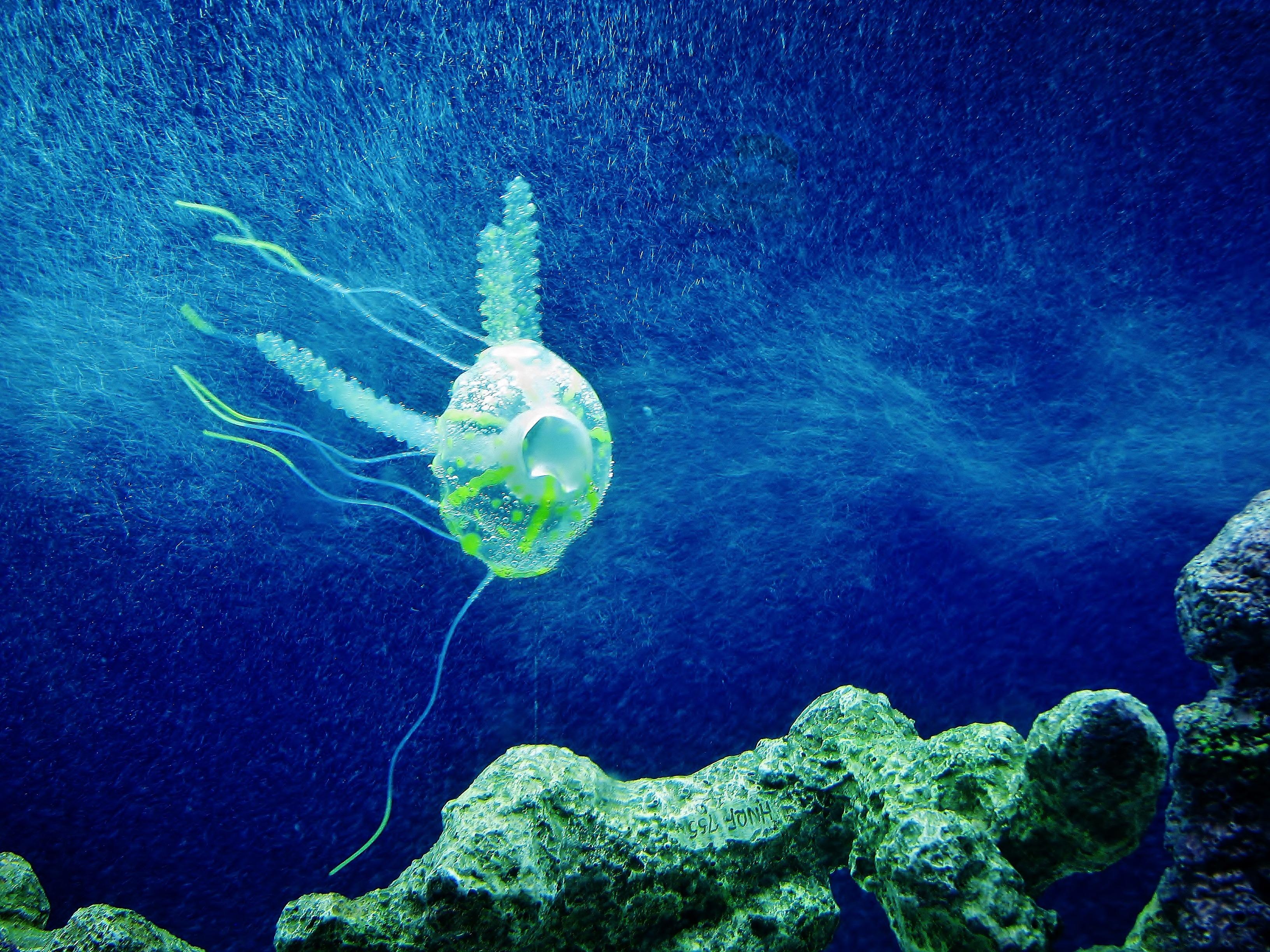 Immagini belle oceano animale sott 39 acqua tropicale - Foto di animali dell oceano ...