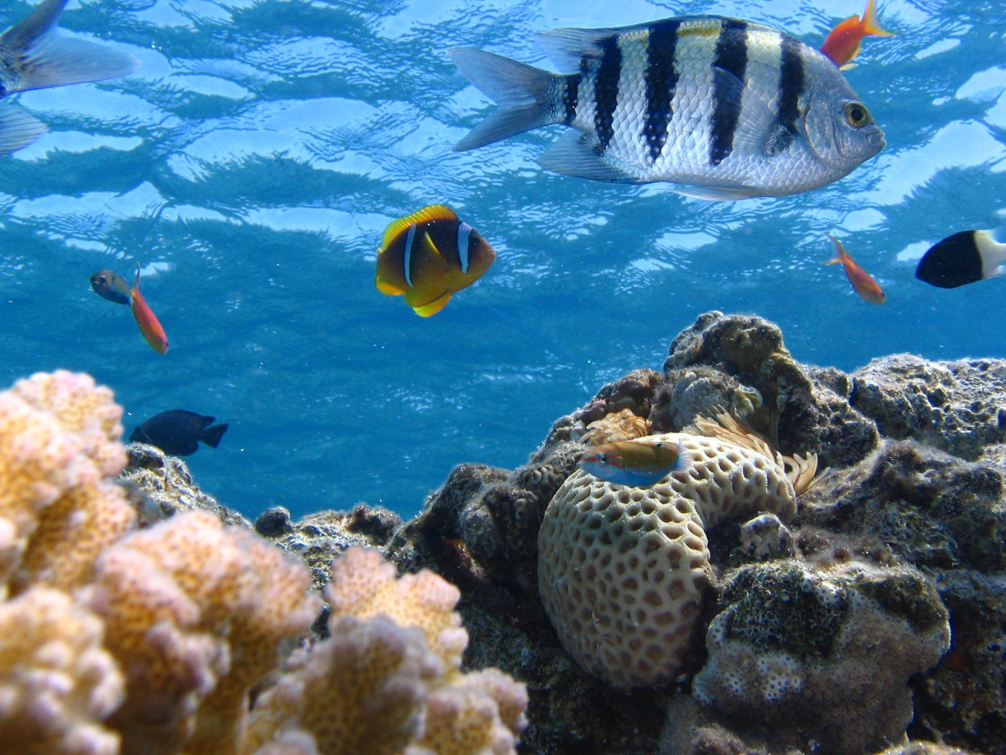 Immagini belle mare oceano animale natura sott 39 acqua for Acquario acqua salata