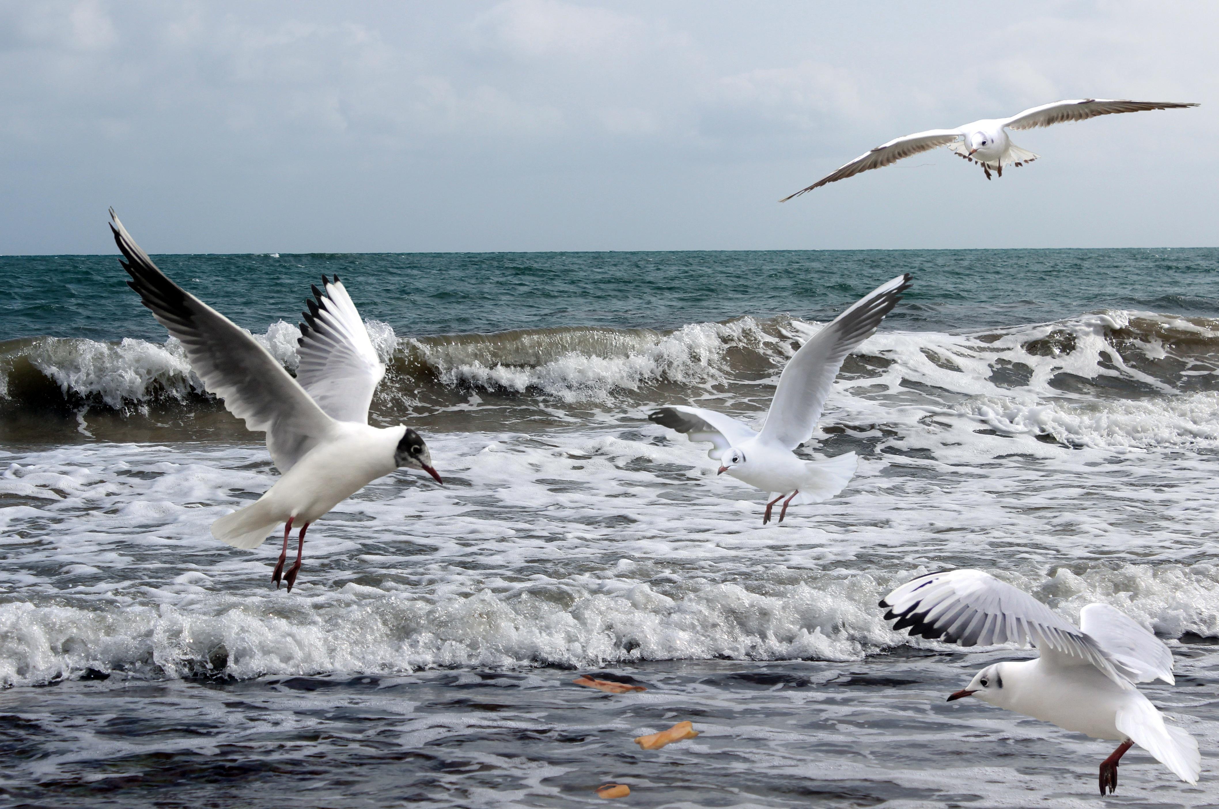 руками чайки над морем картинки невысоким ростом хорошо