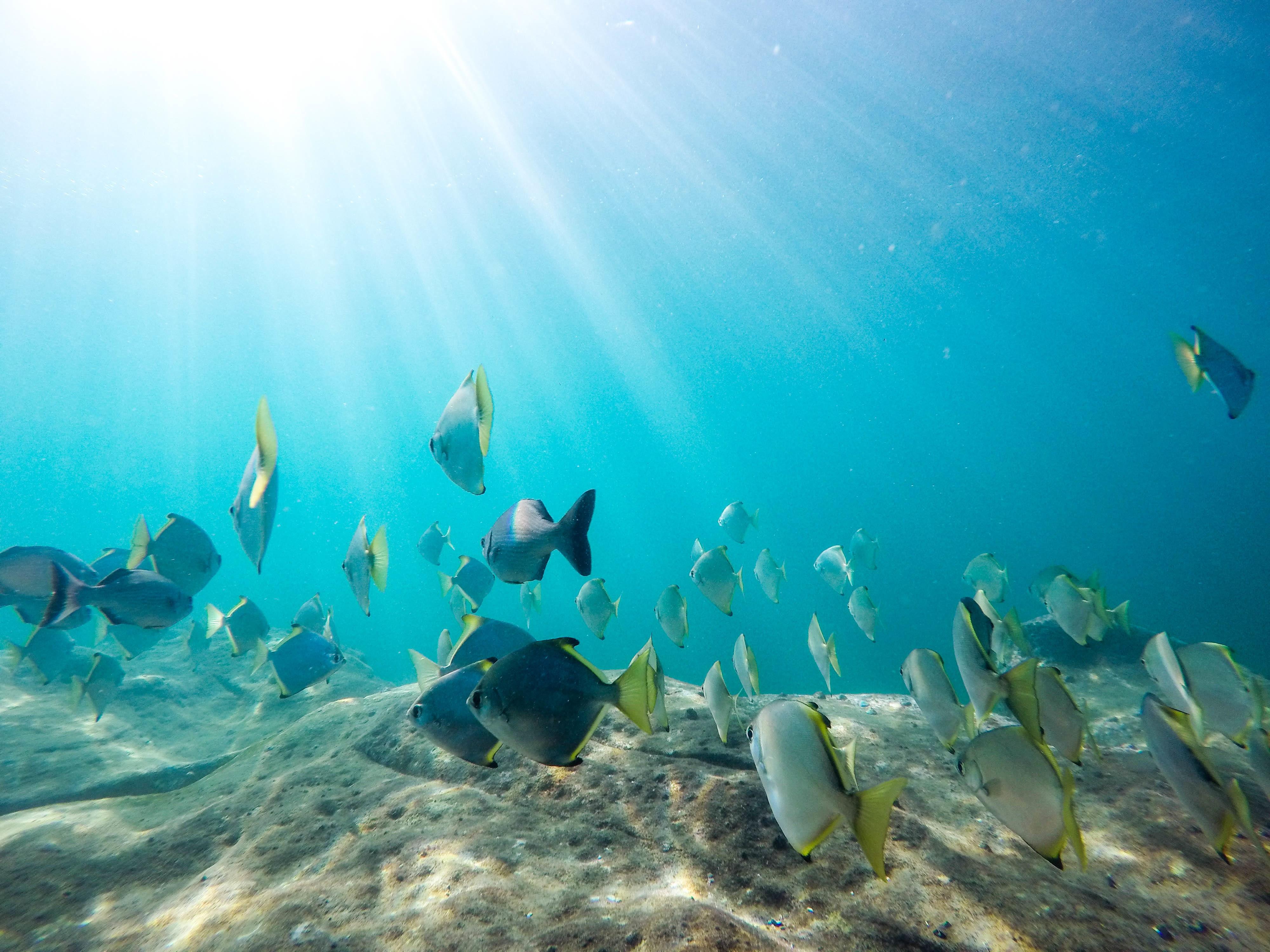 Free Images : sea, ocean, underwater, swimming, coral reef ...