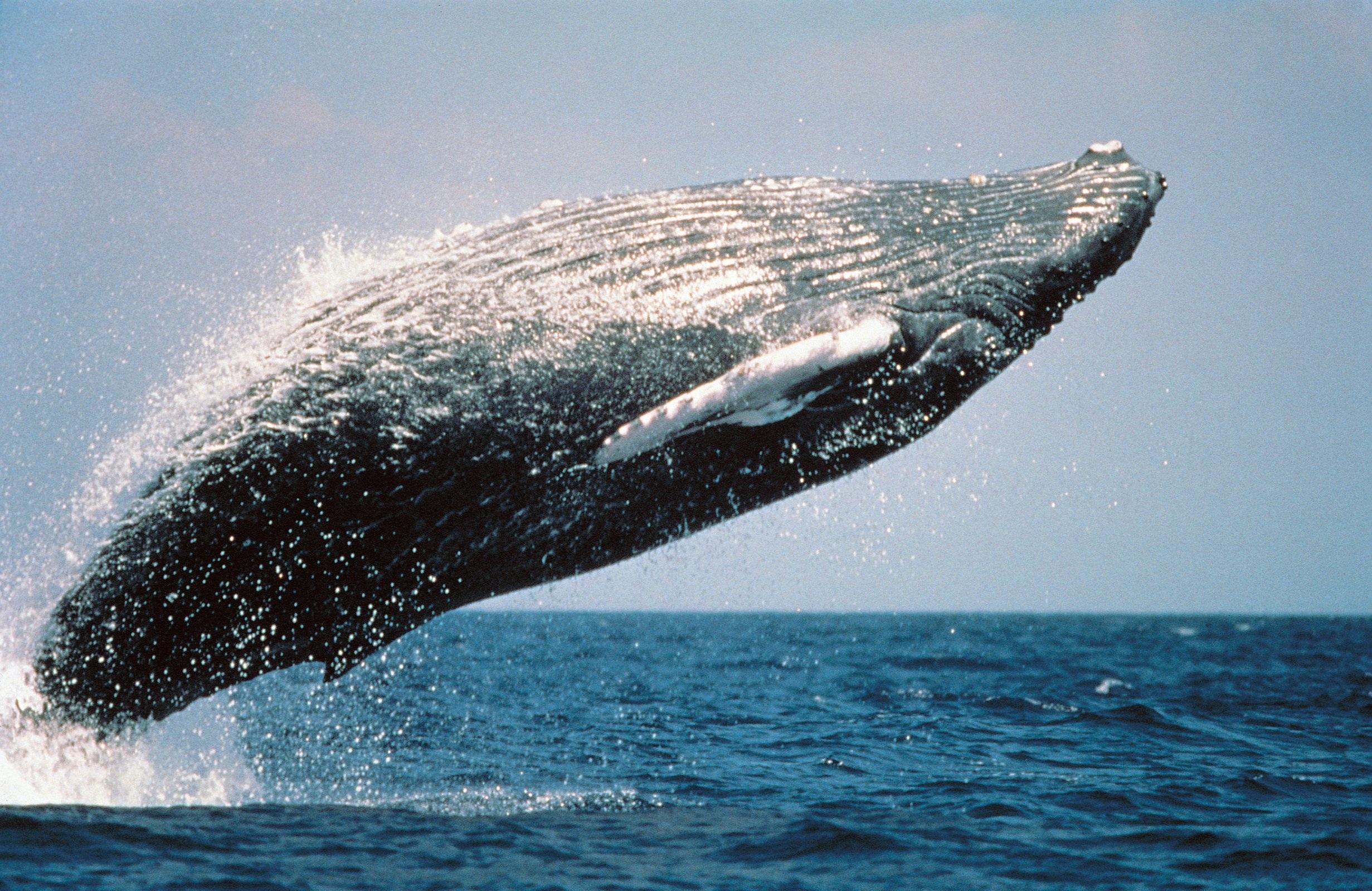 самое большое животное в океане фото это привлекательная для