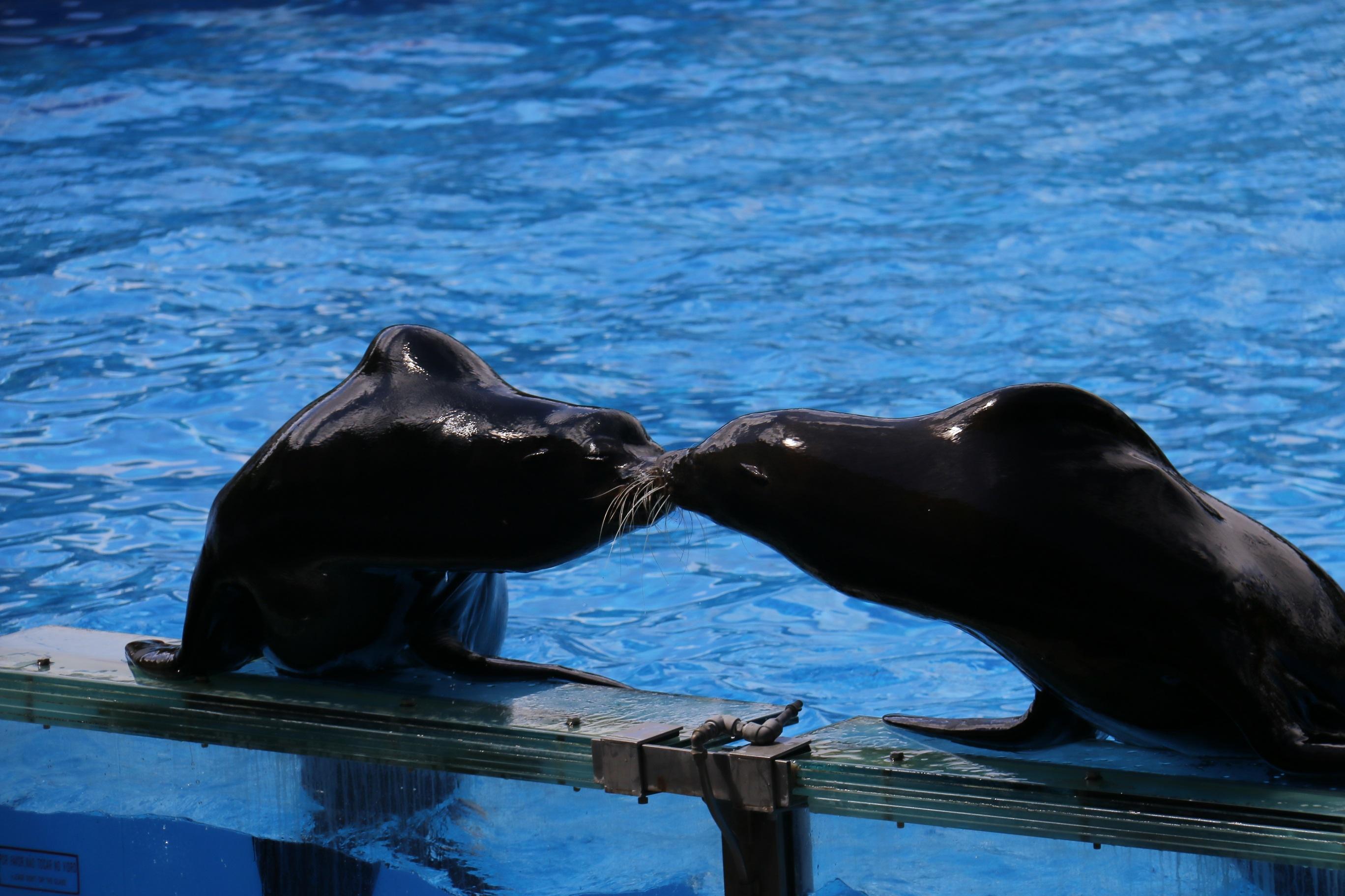 44+ Gambar Binatang Laut Biru Gratis Terbaru